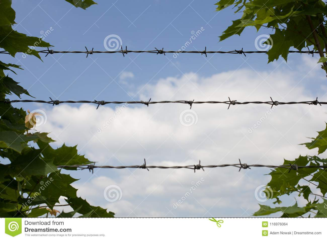 Barbed Wire And Green Leaves. Stock Photo - Image of leaf, field ...