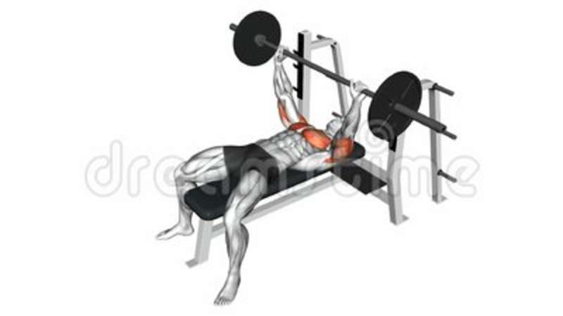 Cool Barbell Bench Press Exercise Gmtry Best Dining Table And Chair Ideas Images Gmtryco