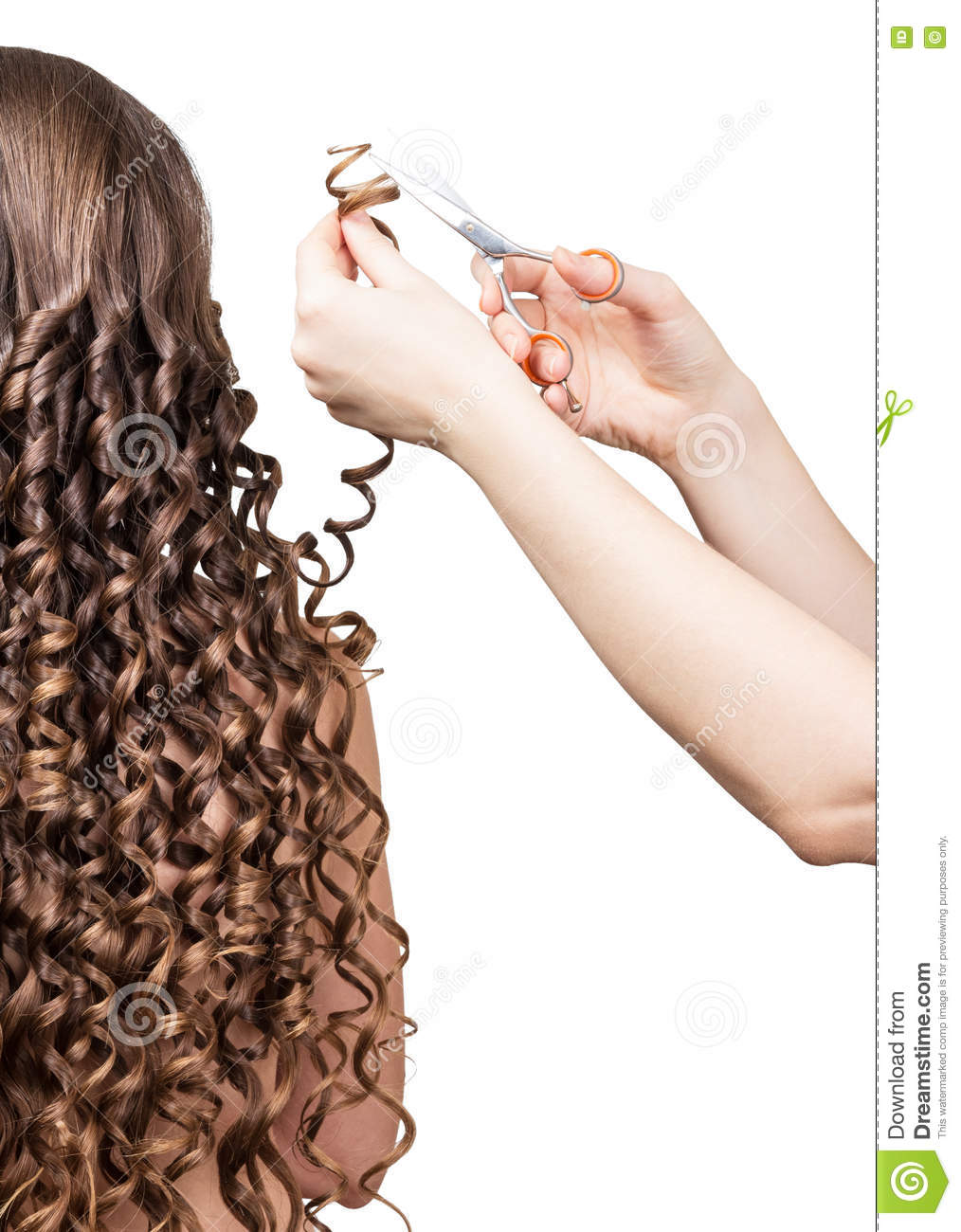Pleasing Barber Trims Tresses Girl With Long Curly Hair Isolated On White Schematic Wiring Diagrams Amerangerunnerswayorg