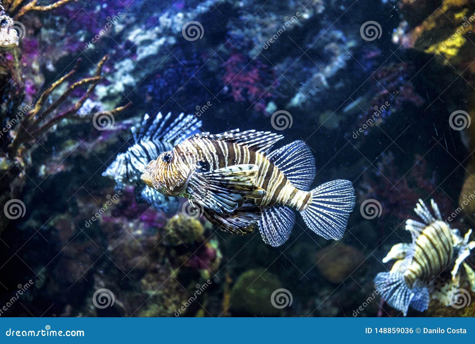 Barcelona Spain, scorpion fish aquarium