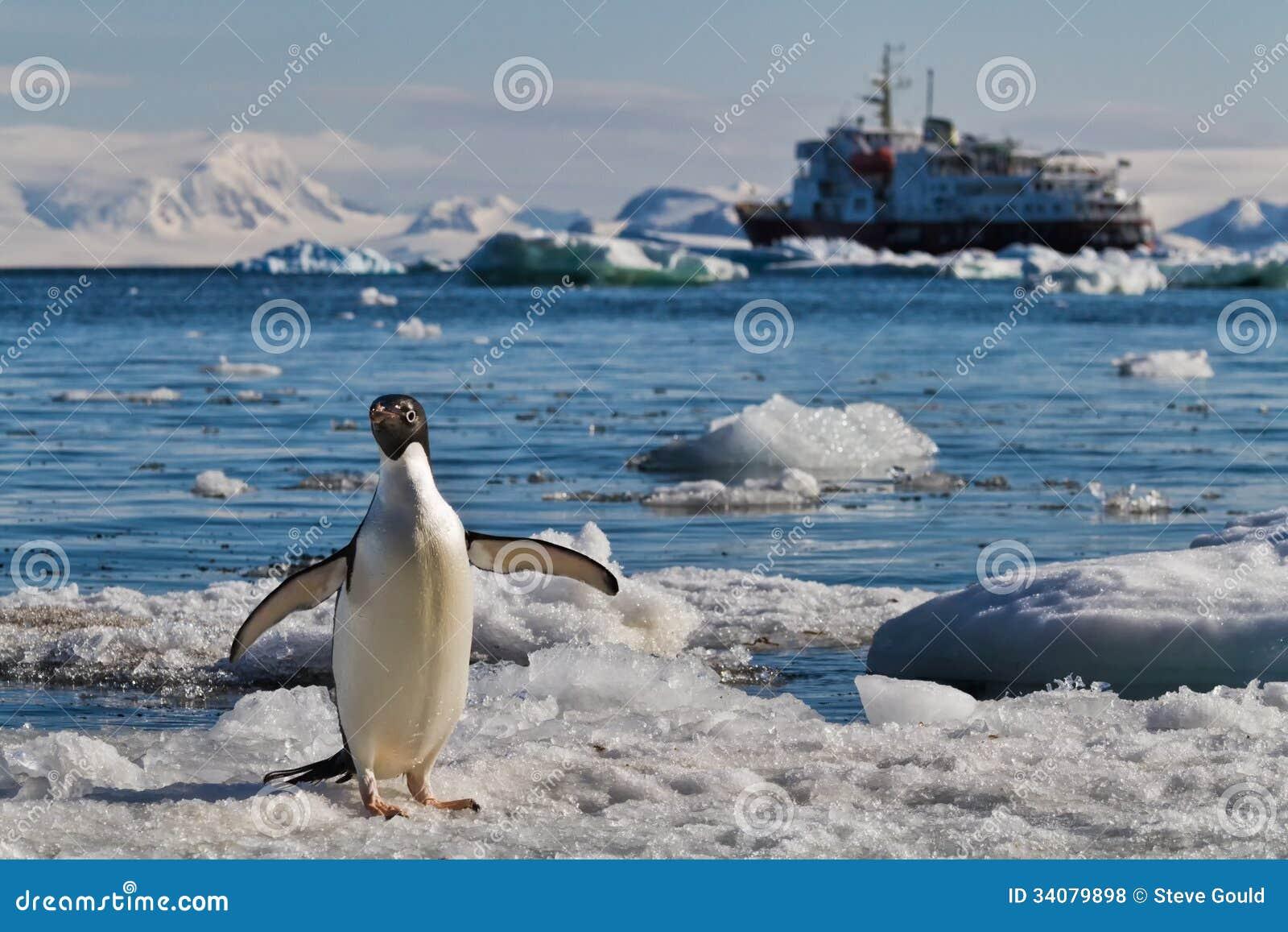 Barco de cruceros de los icebergs del pingüino, la Antártida