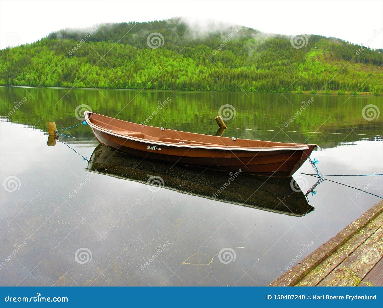 Barco de fila de Brown que refleja con el bosque como fondo
