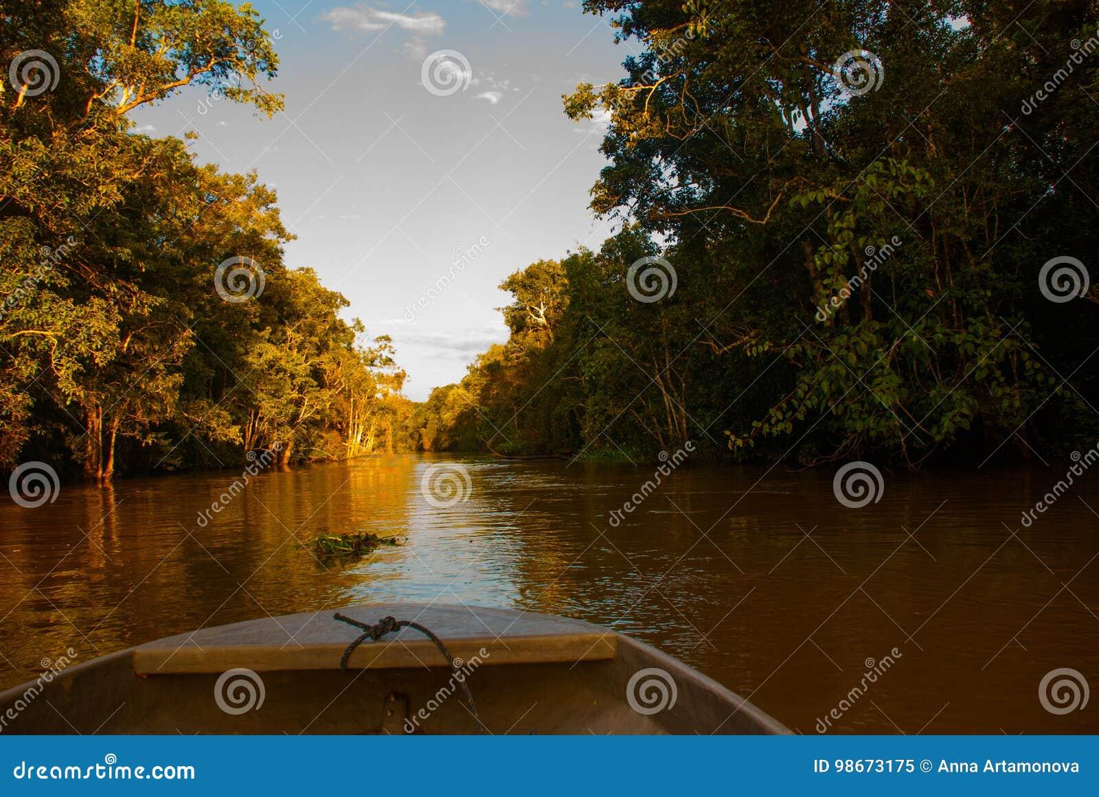 Barco de madeira que flutua no rio Kinabatangan e na floresta tropical densa Sabah, Bornéu, Malásia