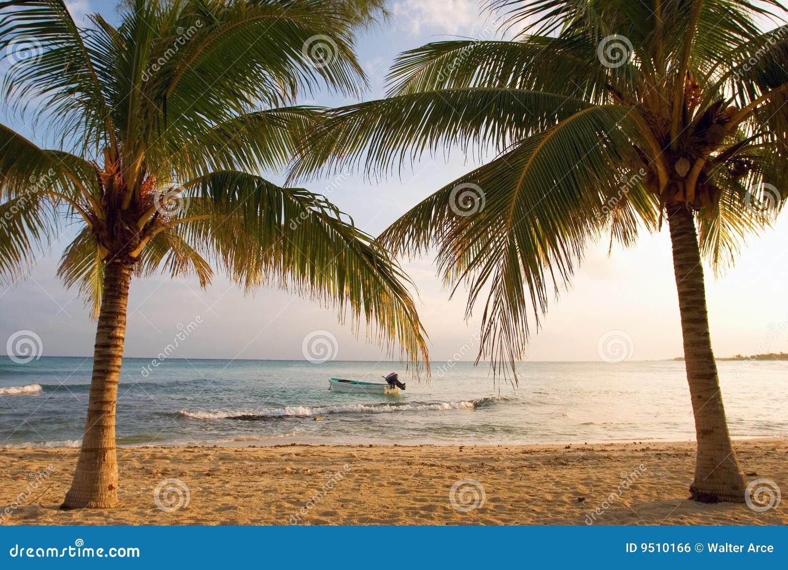 Barco e palmeiras no por do sol