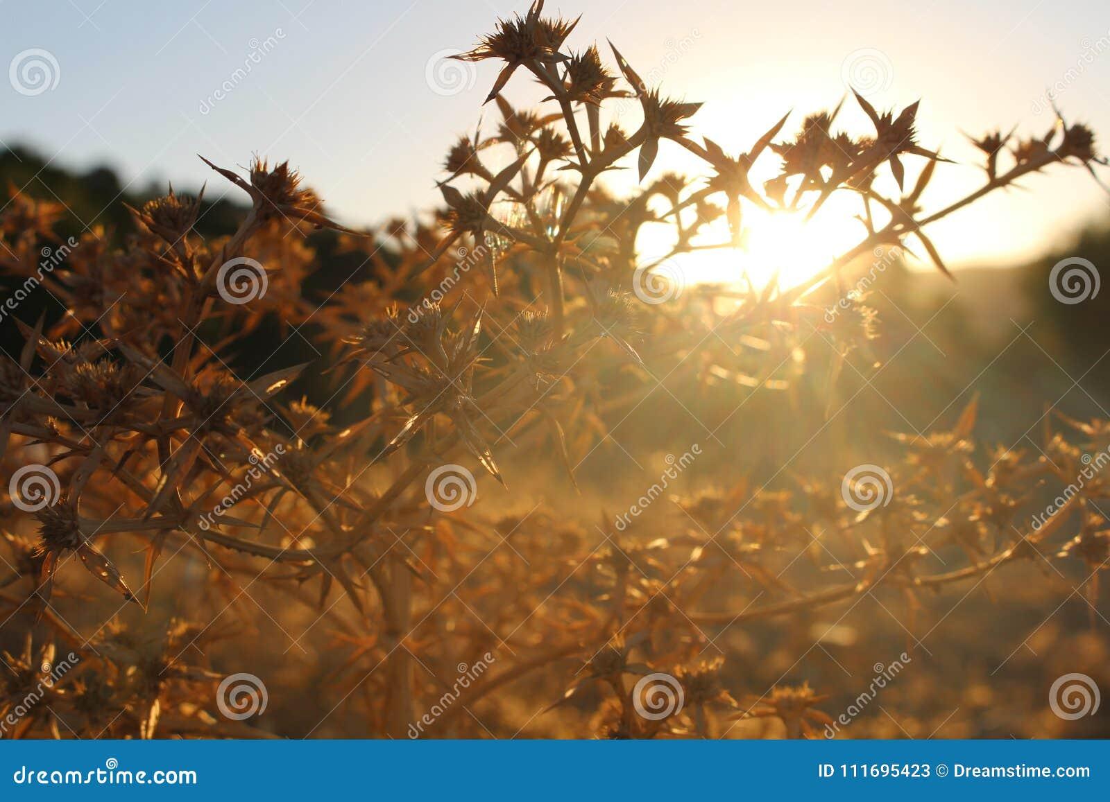 Bardzo ładny Sunsit las naturalny