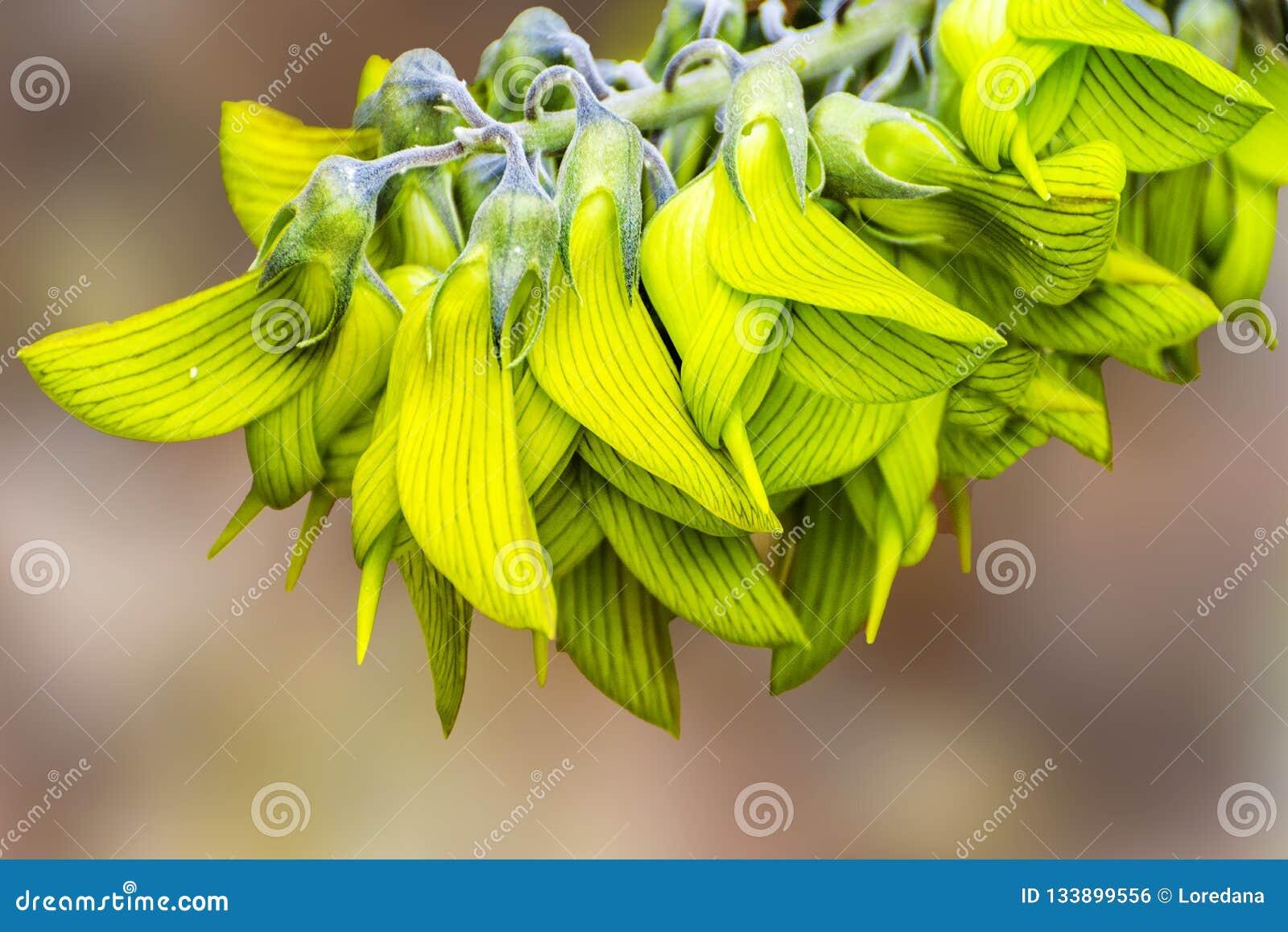 Bardzo oszałamiająco i niezwykły Ptasi kwiat