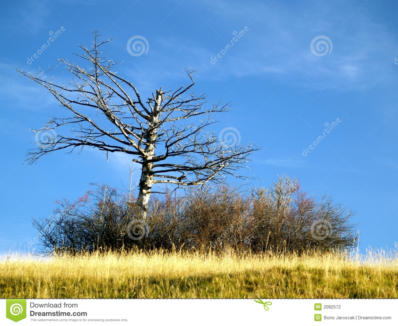 Bare branched tree in meadow