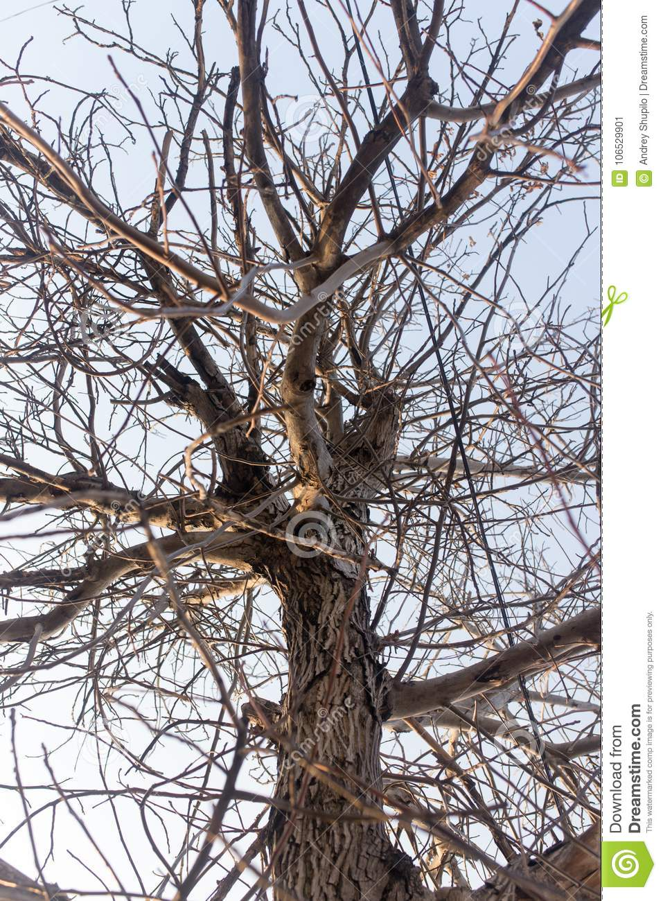 Bare Branches Of An Old Tree In Nature Stock Image - Image ...