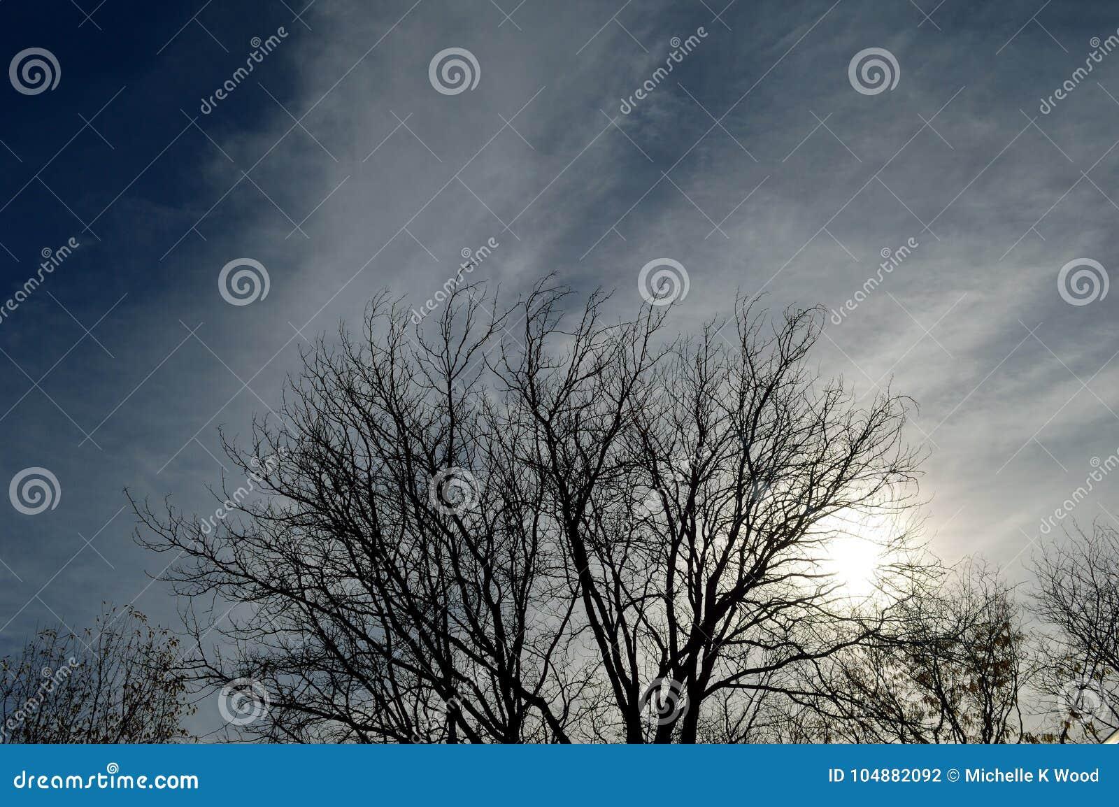 Tree silhouette cloudy stormy sky