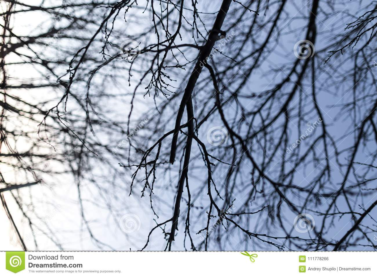 Bare branches of a tree at sunrise