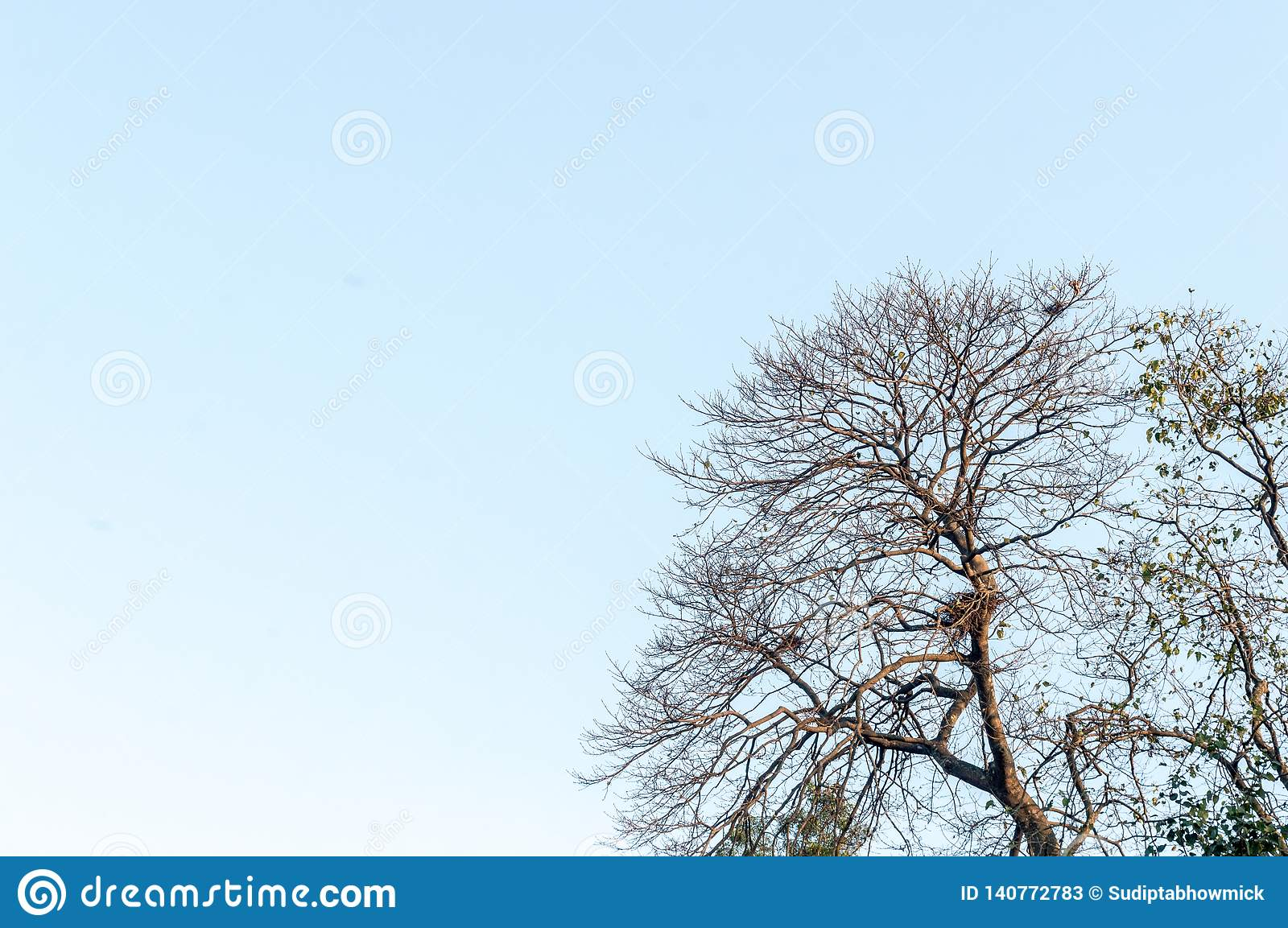 Bare Dead Trees Branch Blue Sky Background Stock Image Image Of