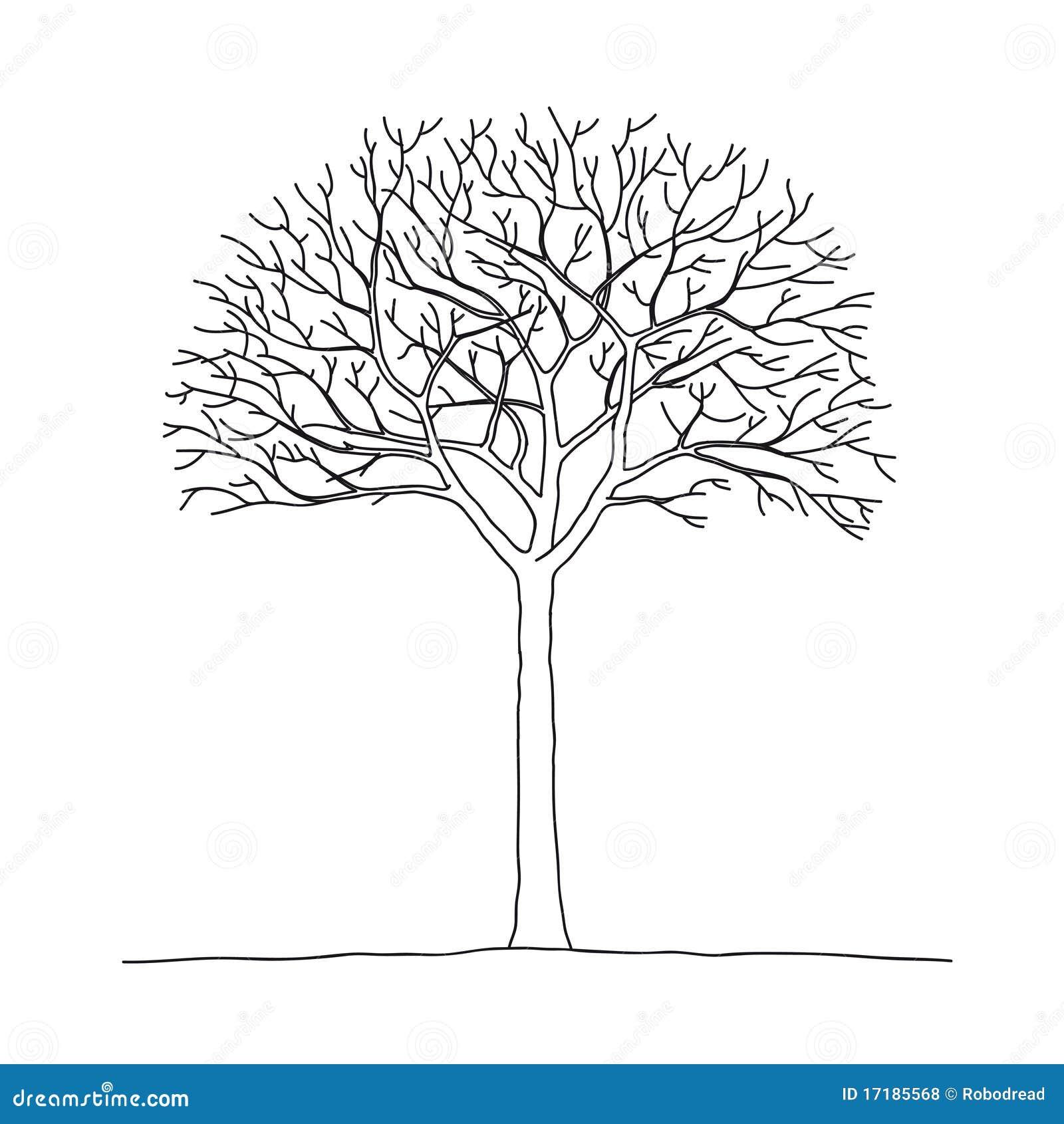 Bare Tree Royalty Free Stock Photos Image 17185568