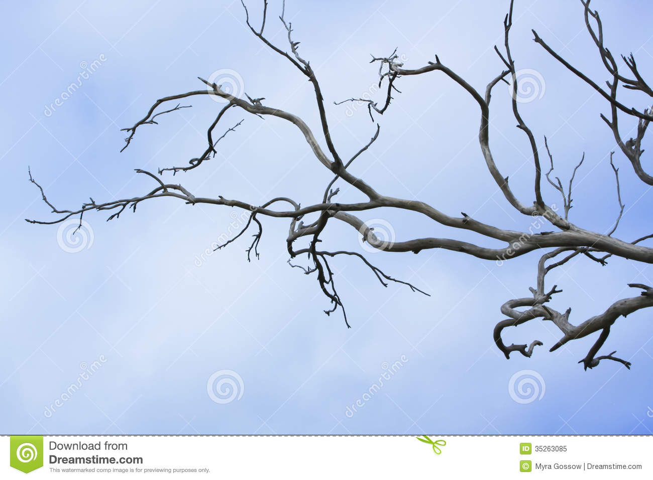 Bare Tree Branches Royalty Free Stock Photo - Image: 35263085