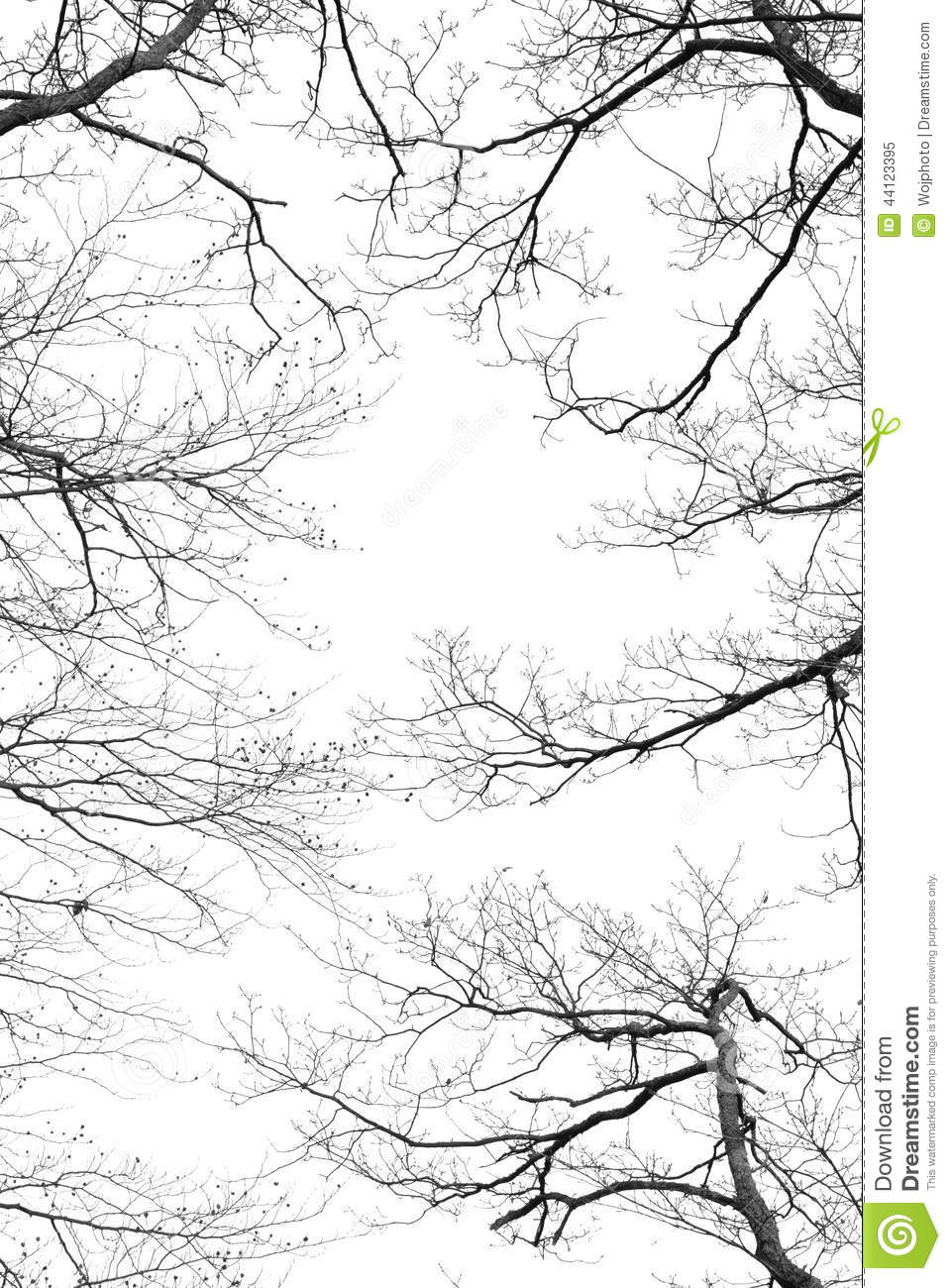 Bare tree branches on a white background