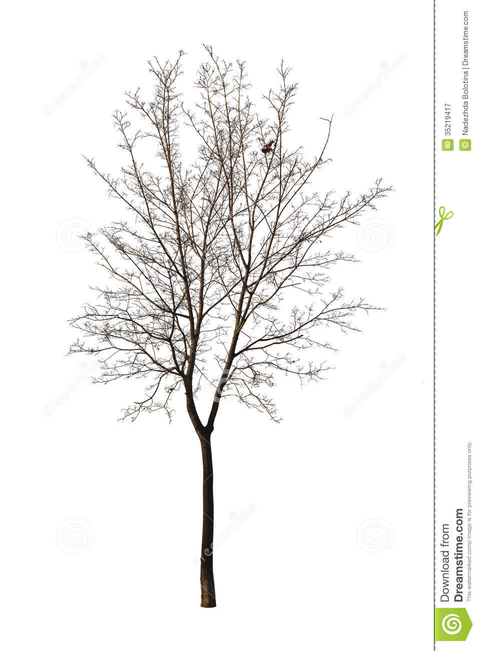 Bare Tree Isolated Over White Royalty Free Stock Photography Image 35219417