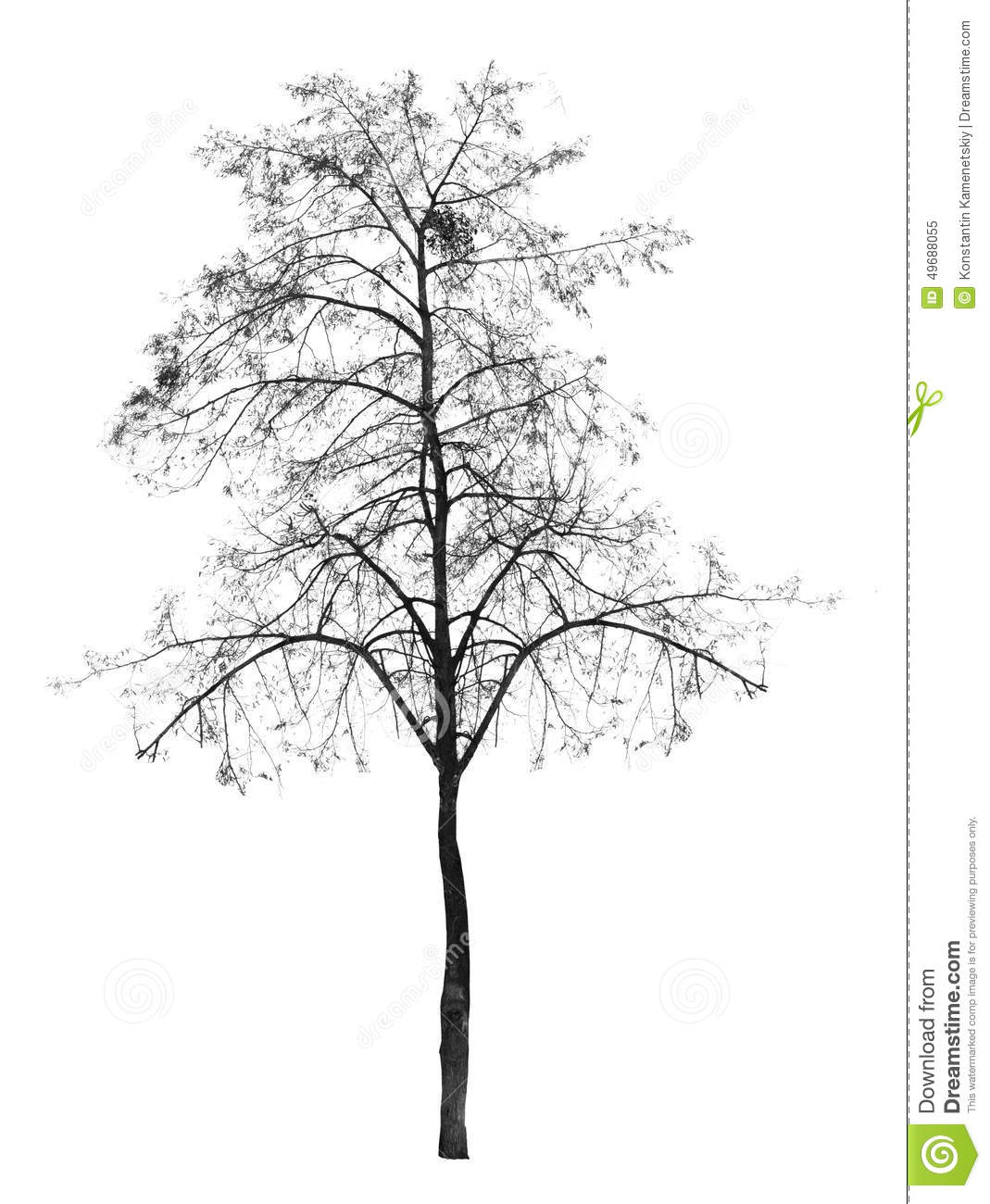 Bare Tree Without Leaves Deciduous Stock Photo