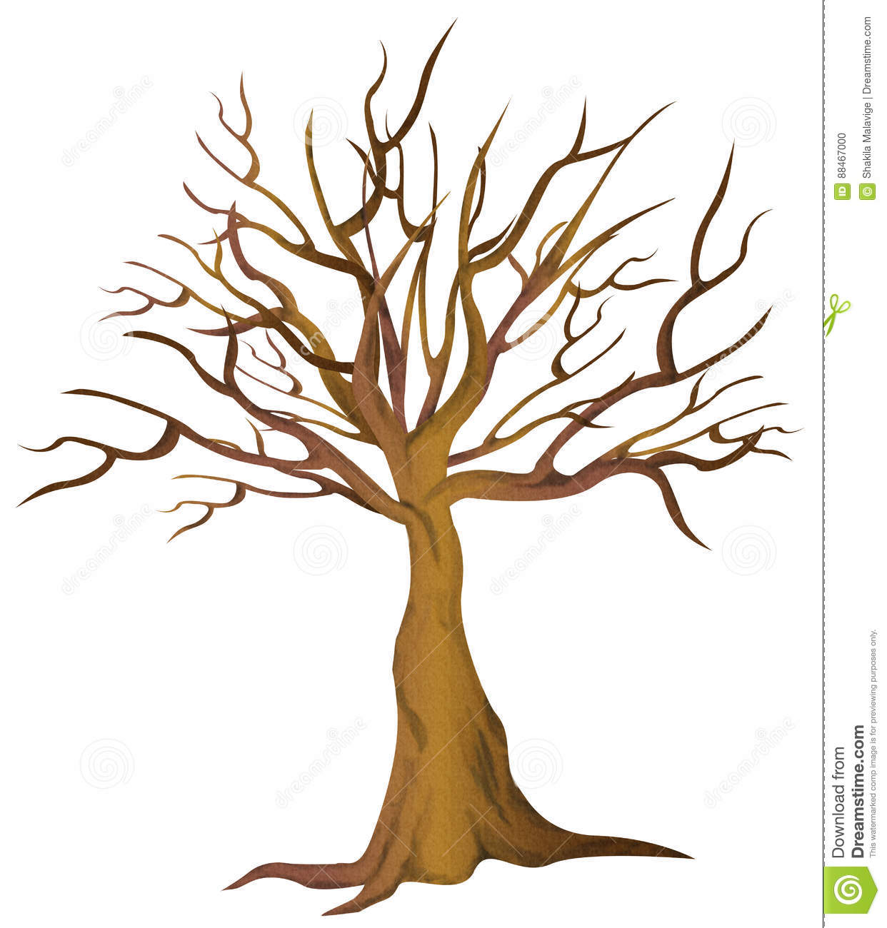 Bare Tree No Leaves Stock Photo. Illustration Of Isolated
