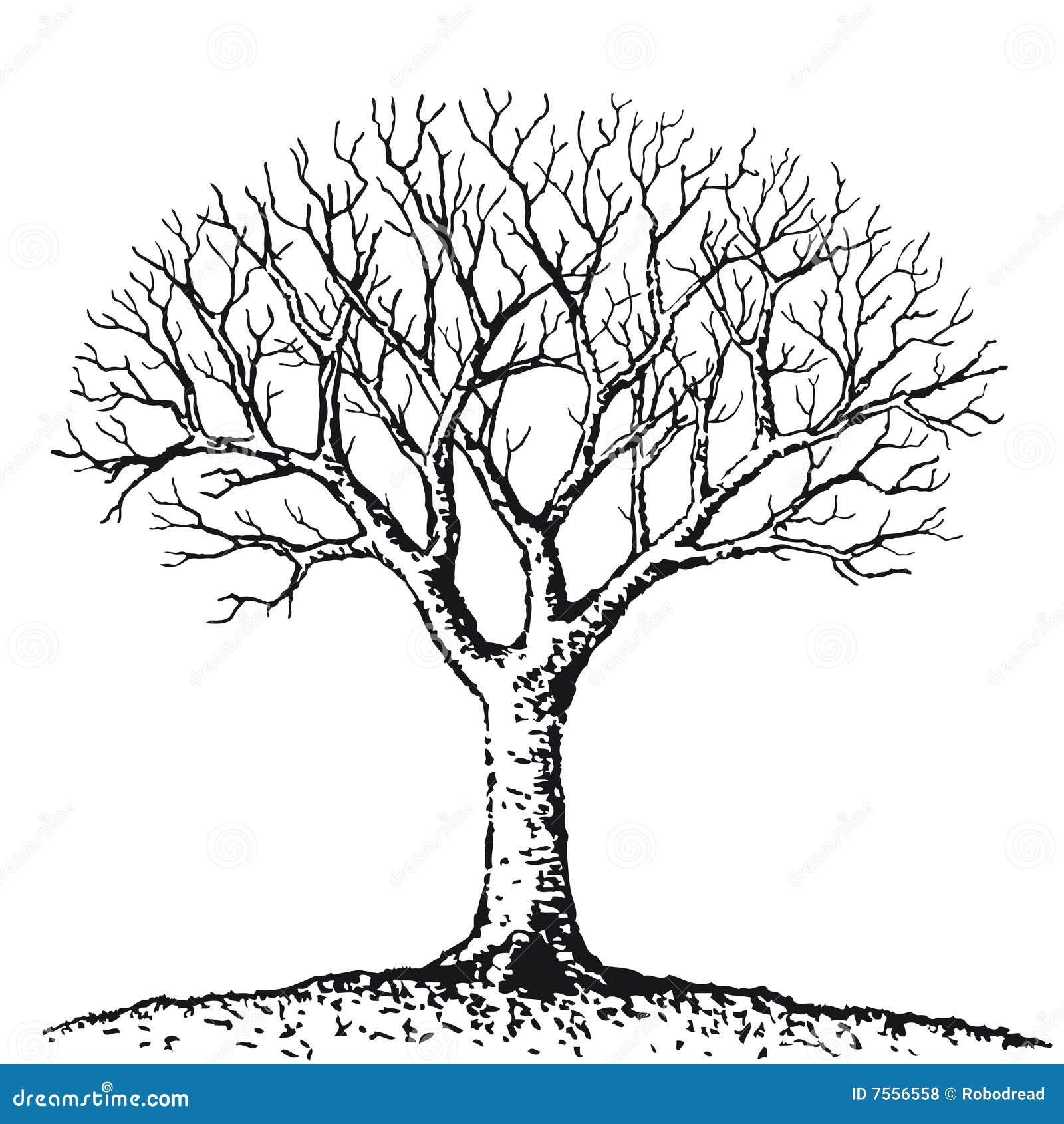 Bare Tree Vector Stock Vector Illustration Of Bare 7556558