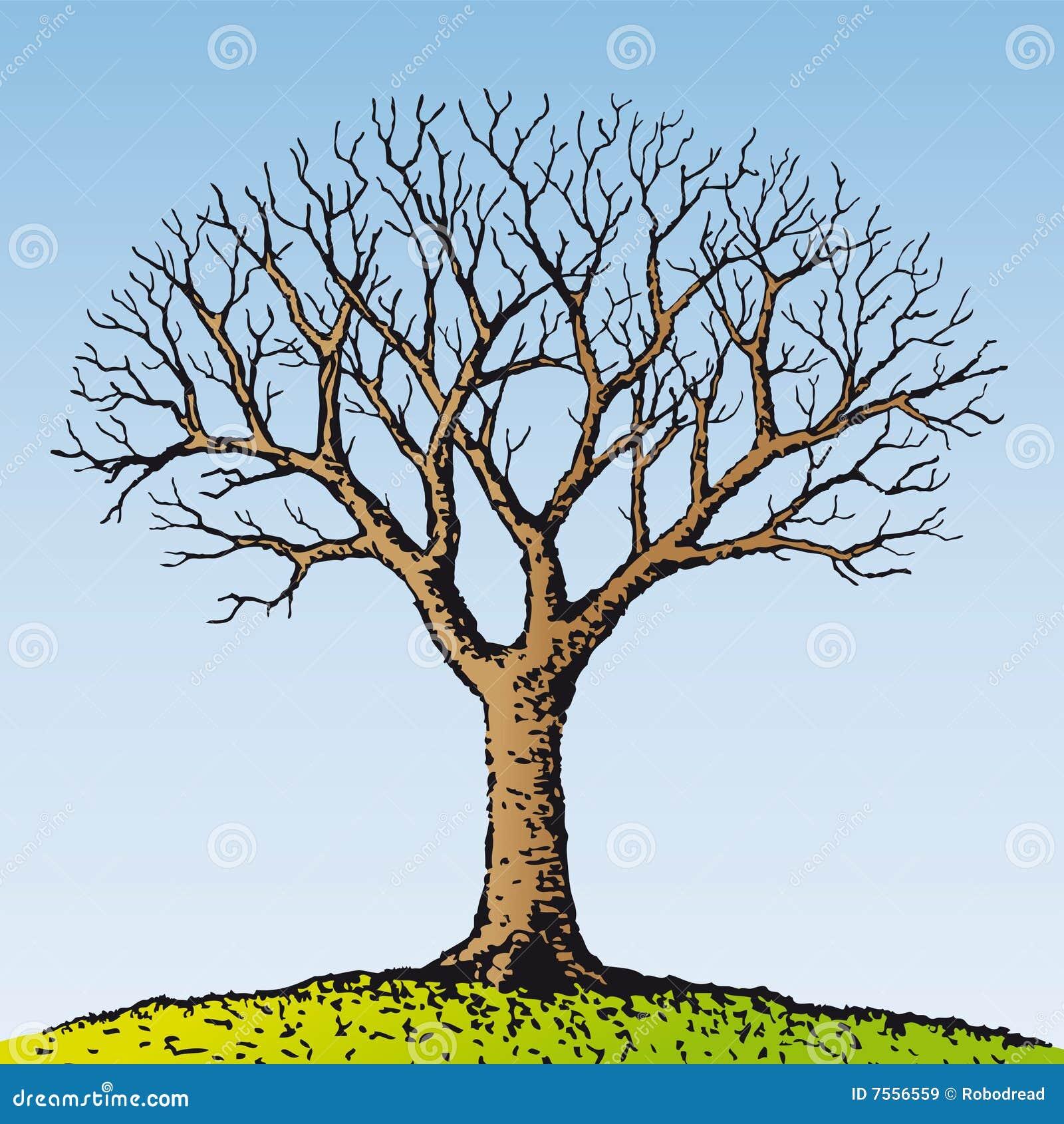 Vector Illustration Tree: Bare Tree (vector) Stock Vector. Illustration Of Forest