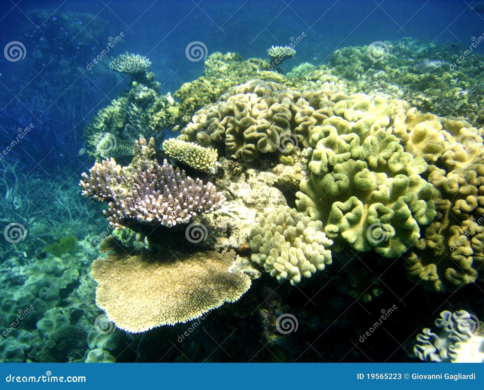 Bariery Wielka Rafa podwodna Scena
