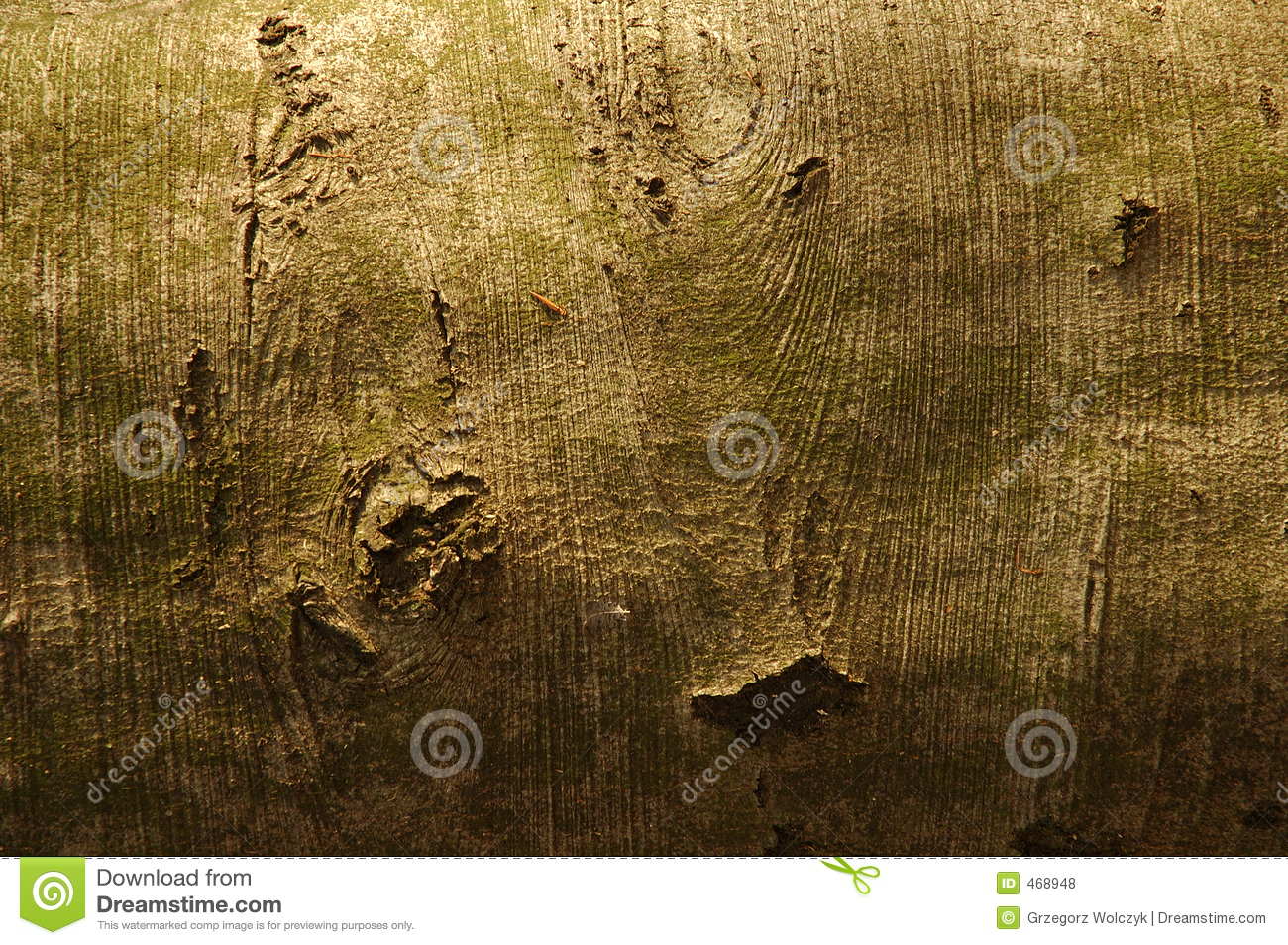 Download Bark stock photo. Image of tree, bark, wood, scale, superficiality - 468948