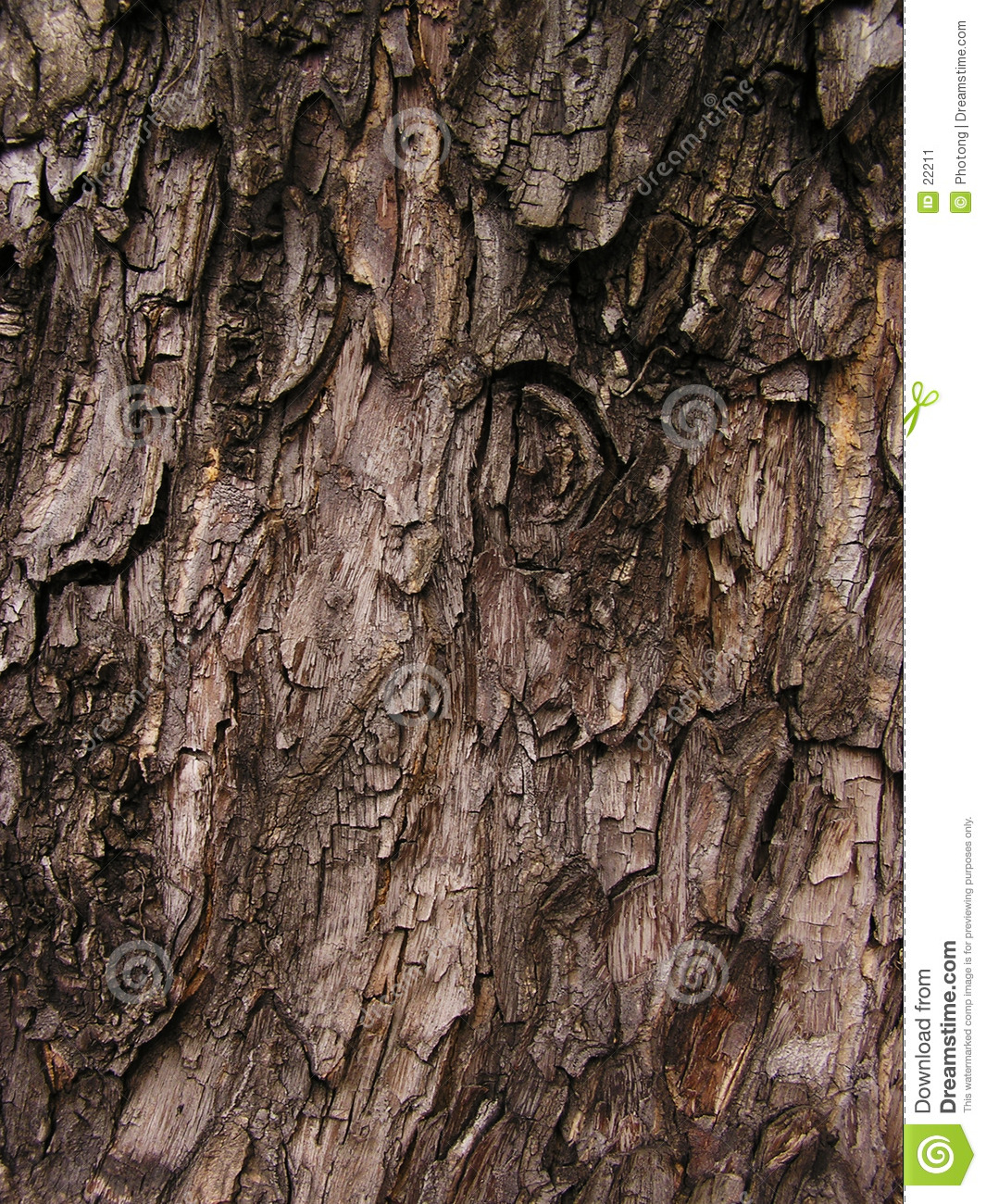 Bark abstract background