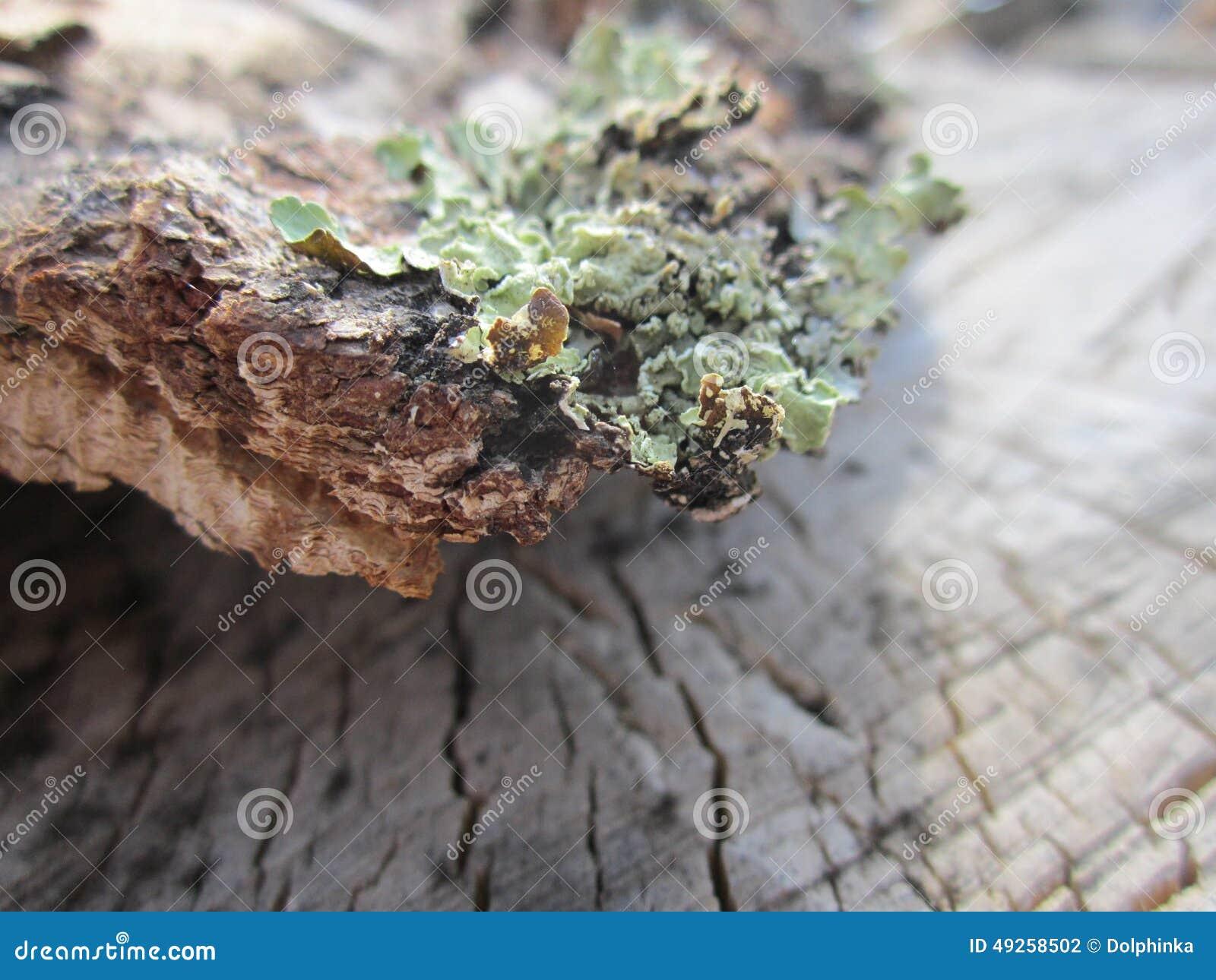 Bark Birch Bark Birch Wood Texture Elm Birch Firewood Logs