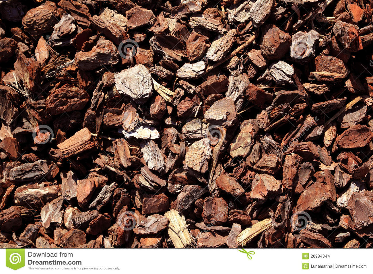 Bark Brown Tree Trunk Pattern Stock Photo Image Of