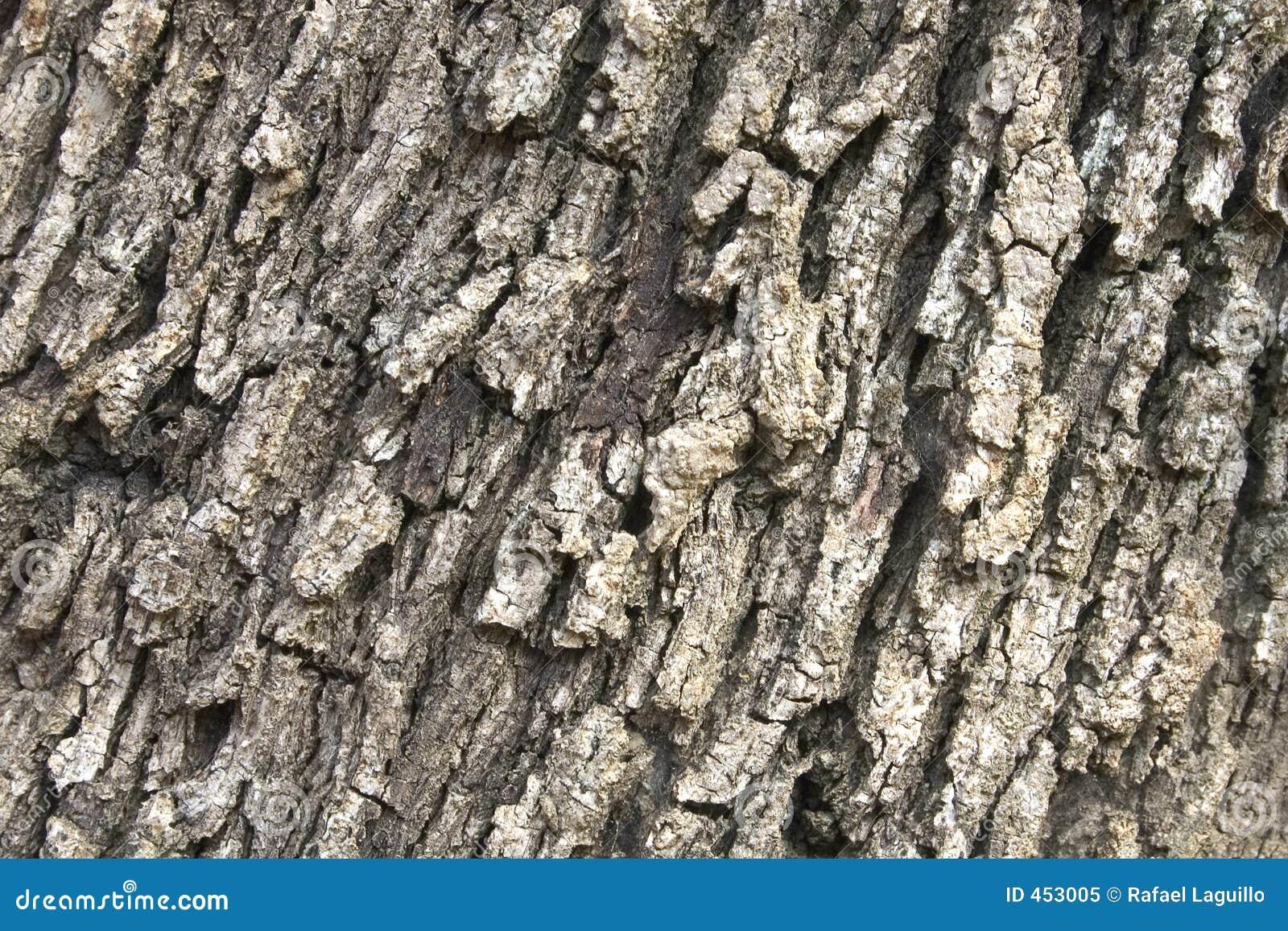 Bark texture 07