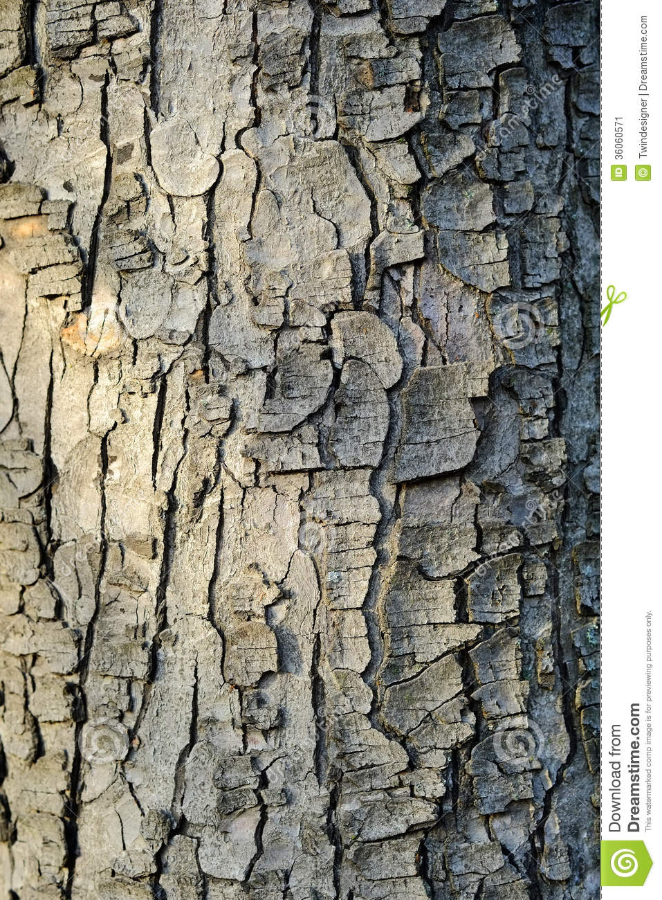 Decorative Wood Bark