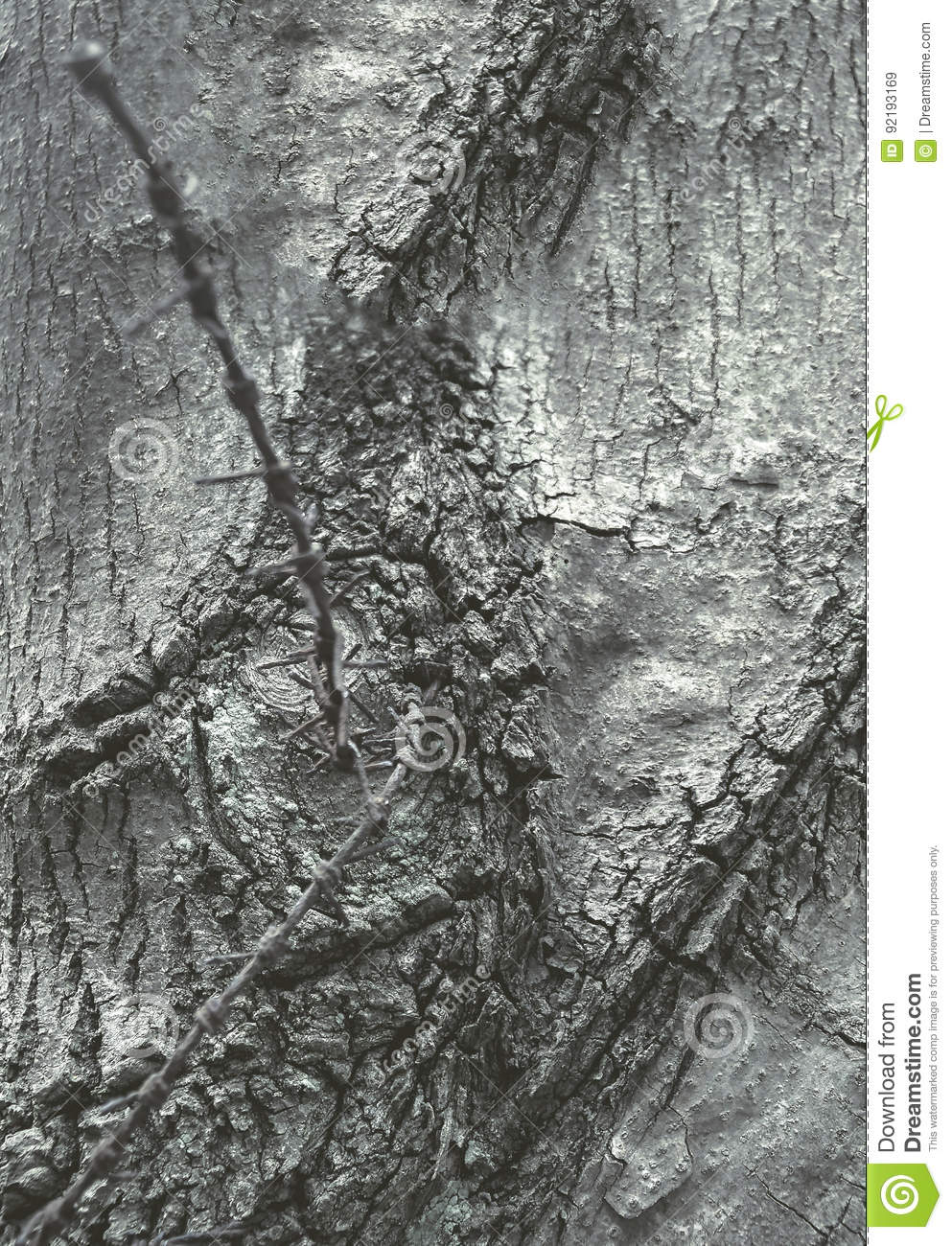 Bark Of A Tree, With A Barbed Wire Inside Stock Image - Image of ...