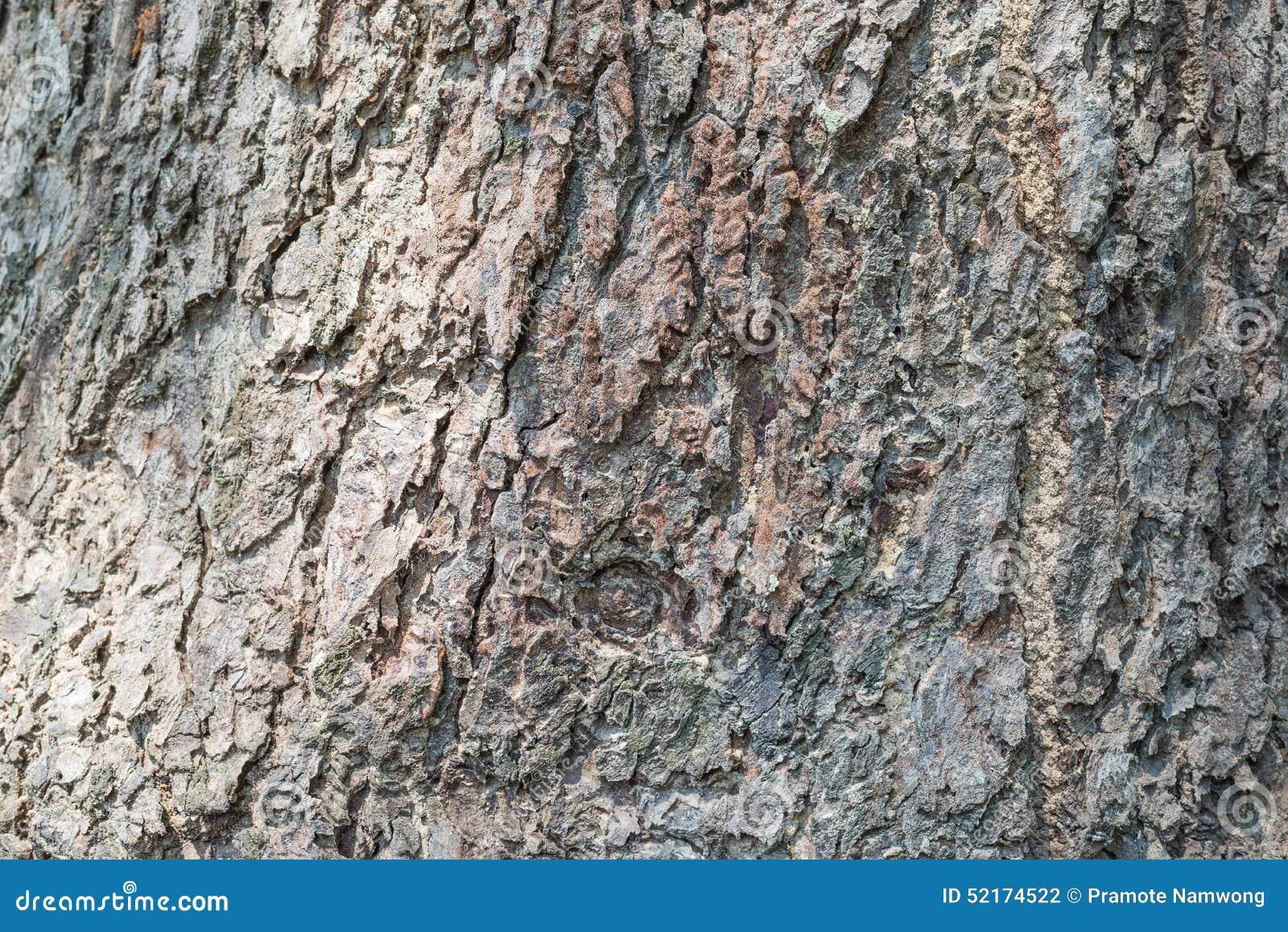 Barke der Baumbeschaffenheit