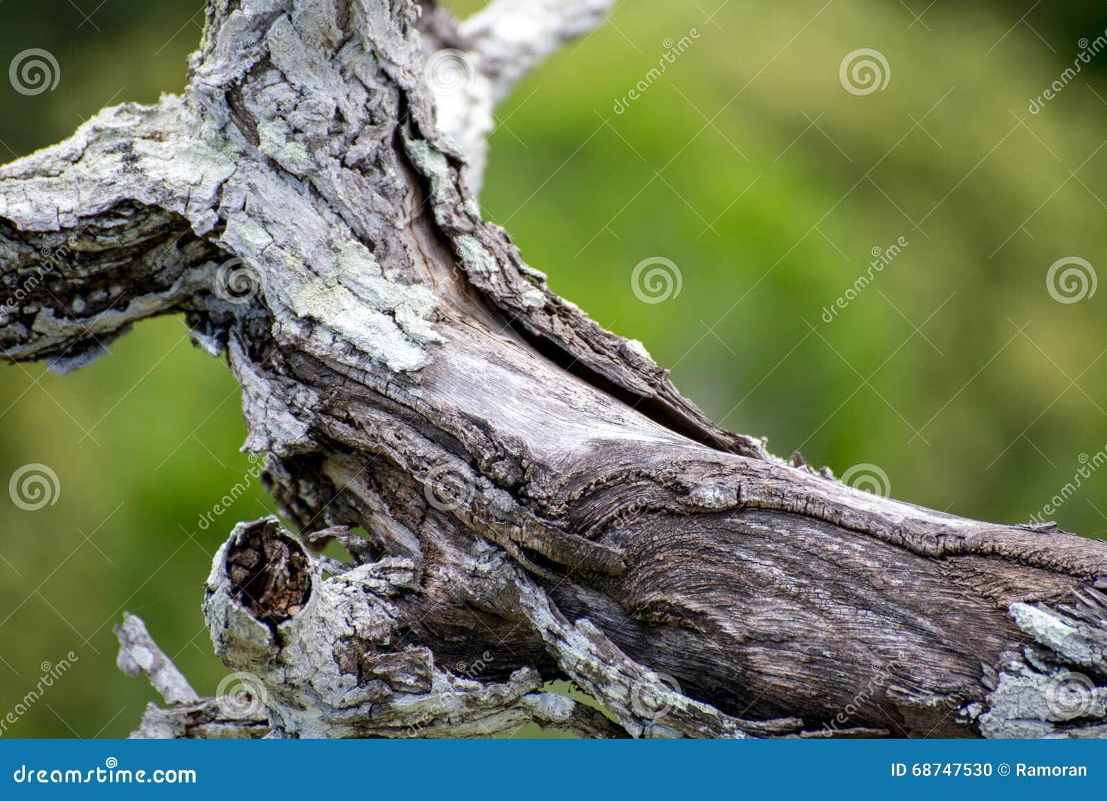 Barkentyna drewno