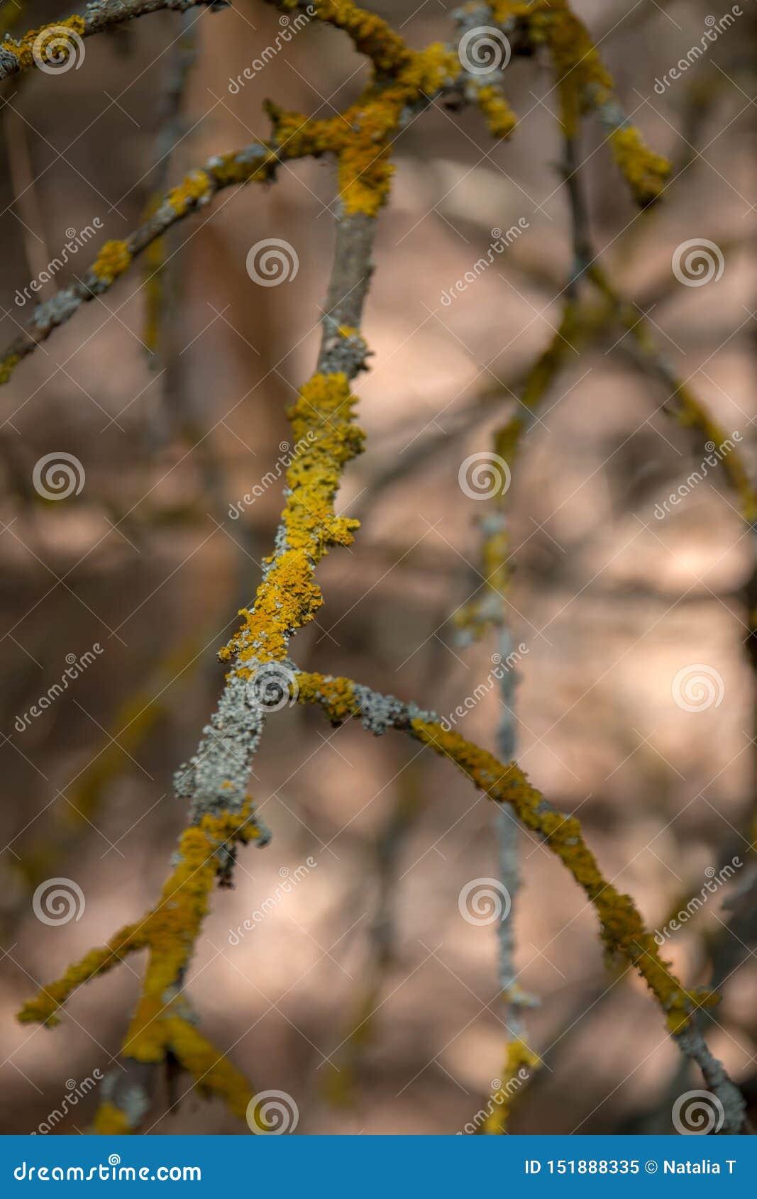 Barkentyna drzewo zakrywający, z kredką