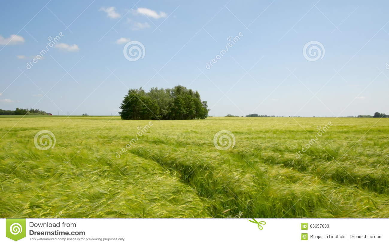 Cereal field stock video image of june hyperlapse farmland 66657633 ccuart Images