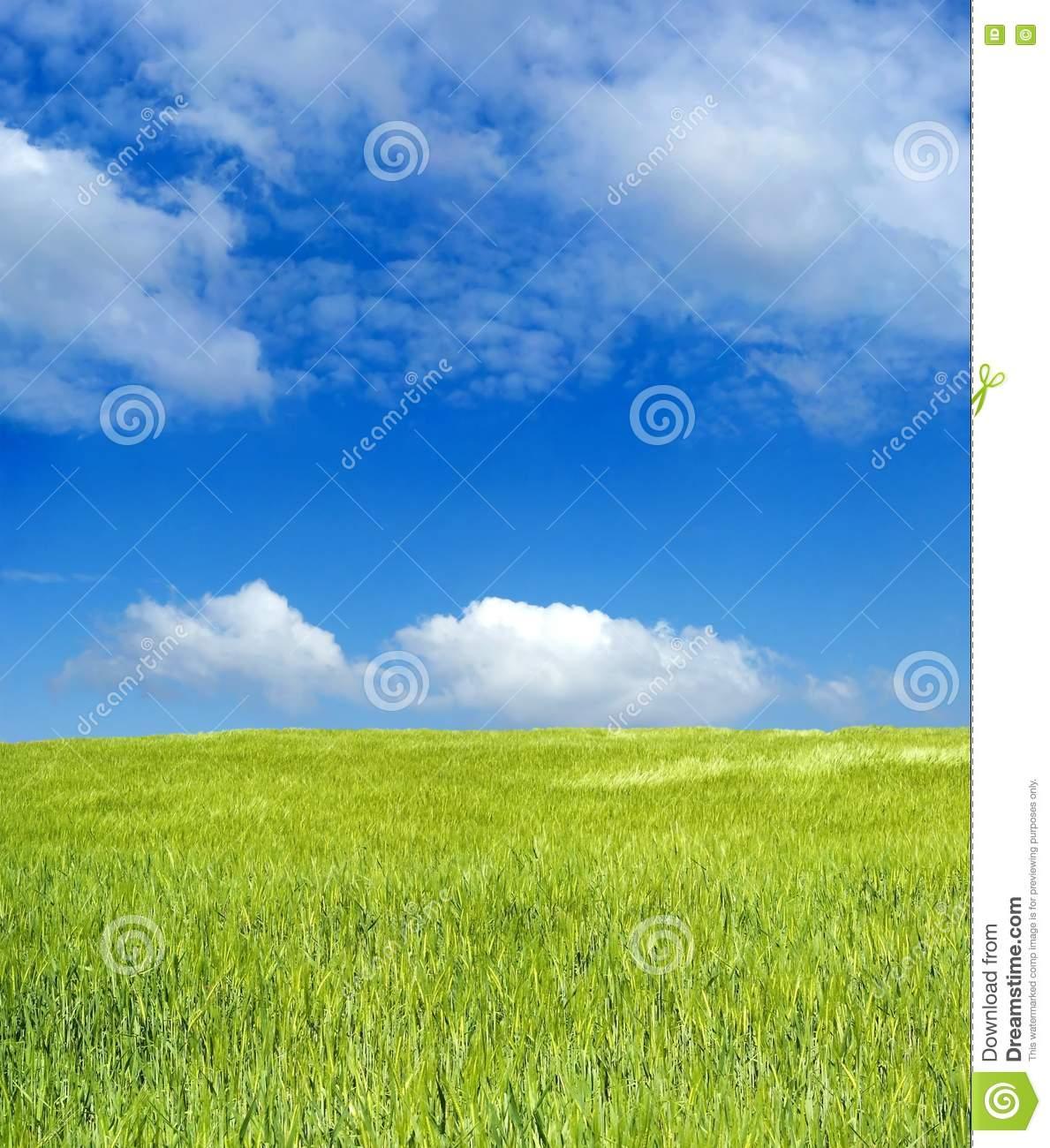 de827b710a4 Free Stock Photo  Barley Field Over Blue Sky Picture. Image  2338715