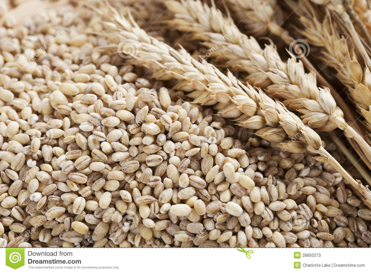 Barley Grains And Stalks Stock Photos - Image: 28850273