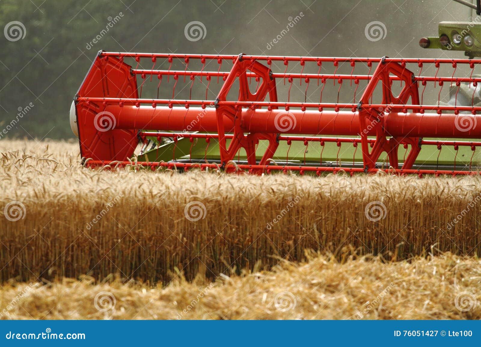 Barley harvest stock image  Image of machine, harvesting