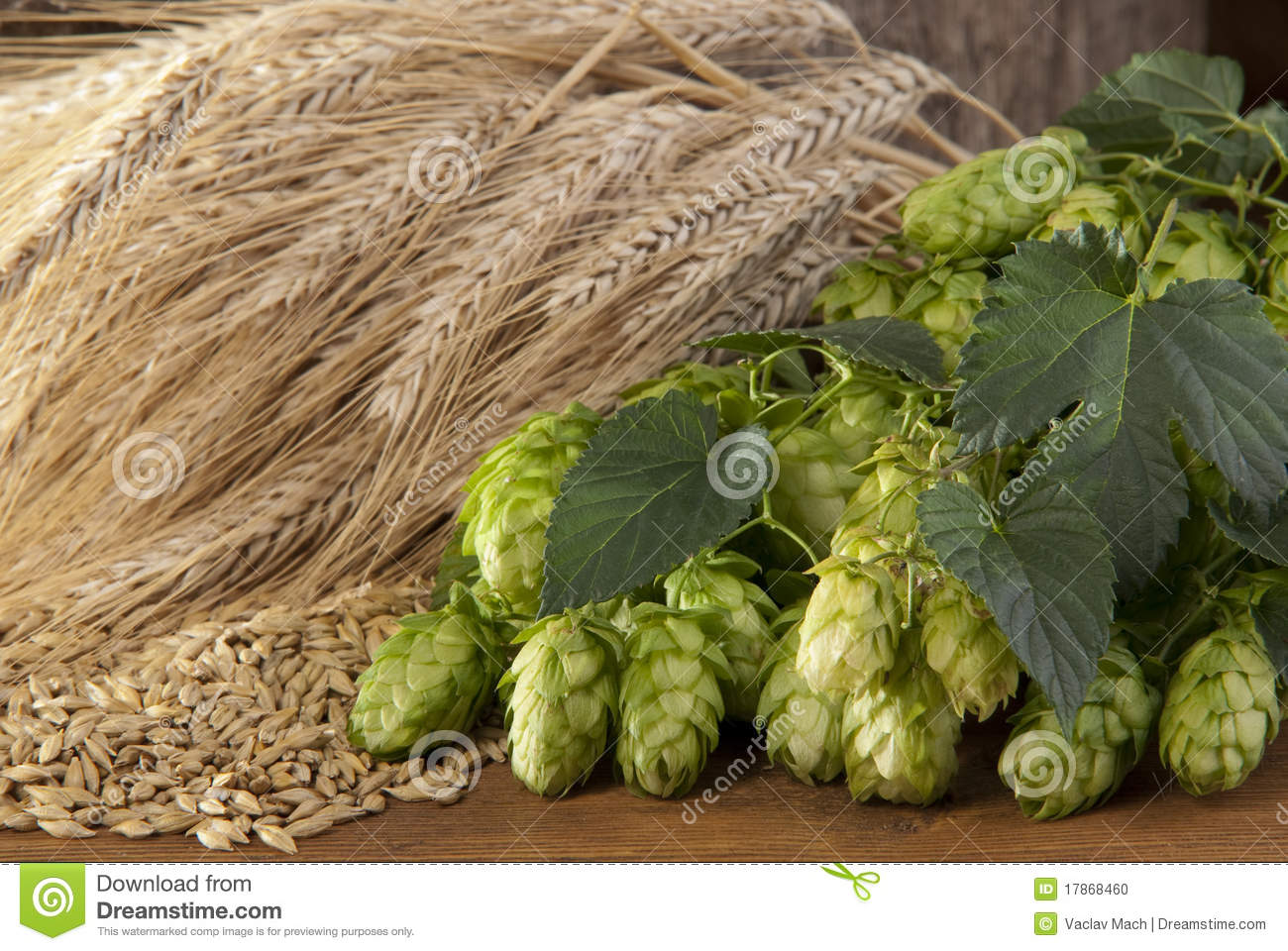 barley and hop cones stock photo image 17868460 Barley Wheat Vector Barley Malt Vector