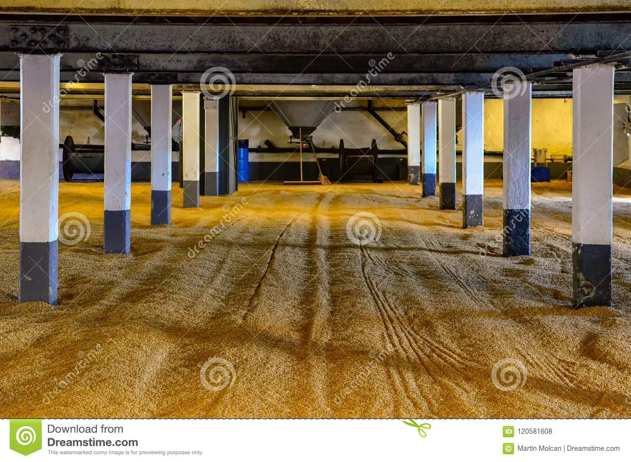 Barley malt on malting floor in the distillery, Scotland