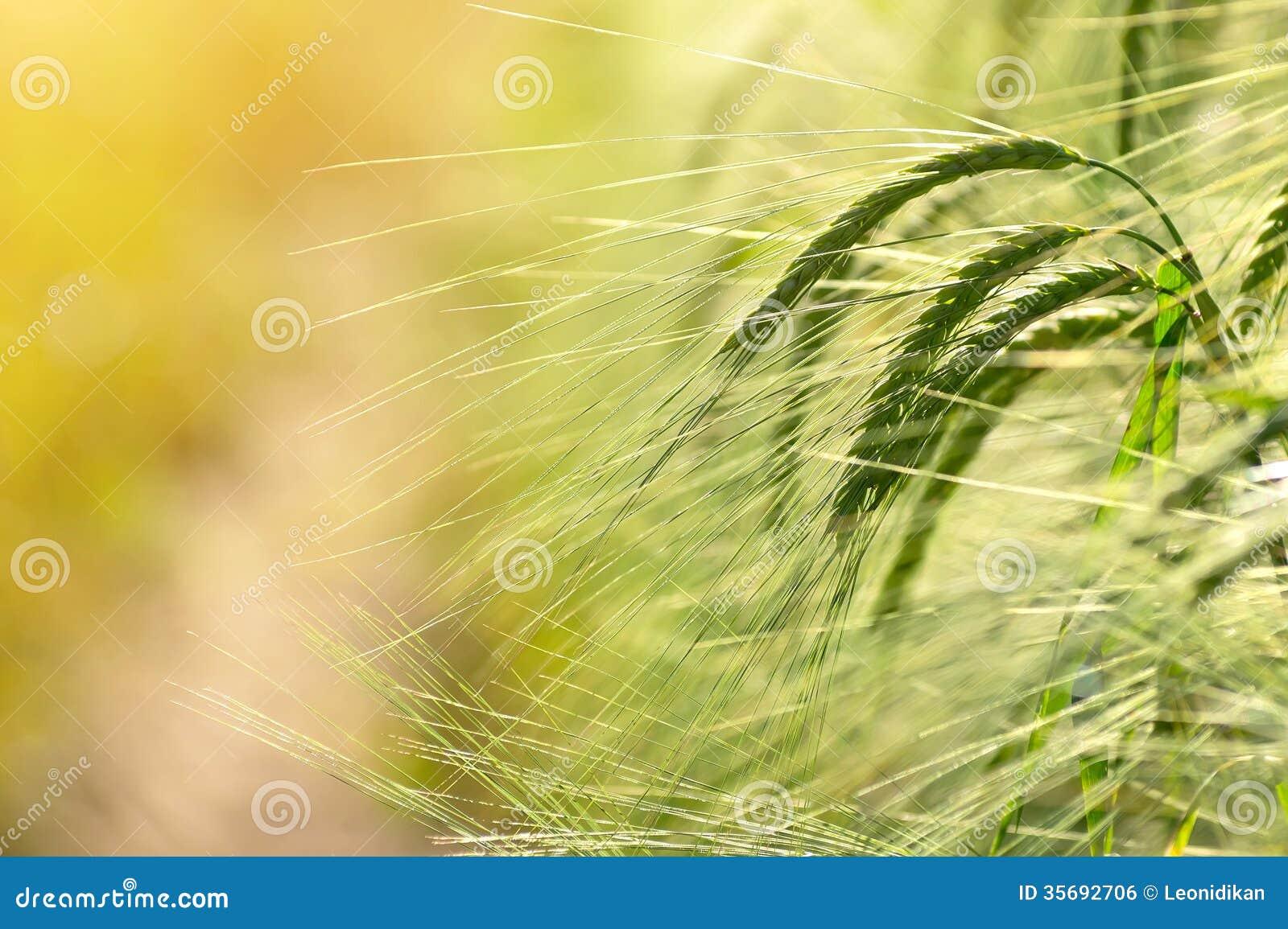 Barley the road