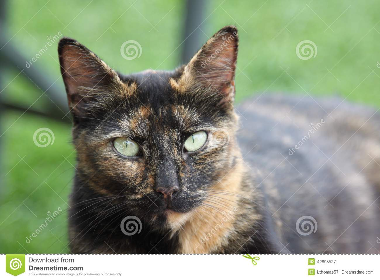 Barn Cat With Light Green Eyes Stock Image Image Of