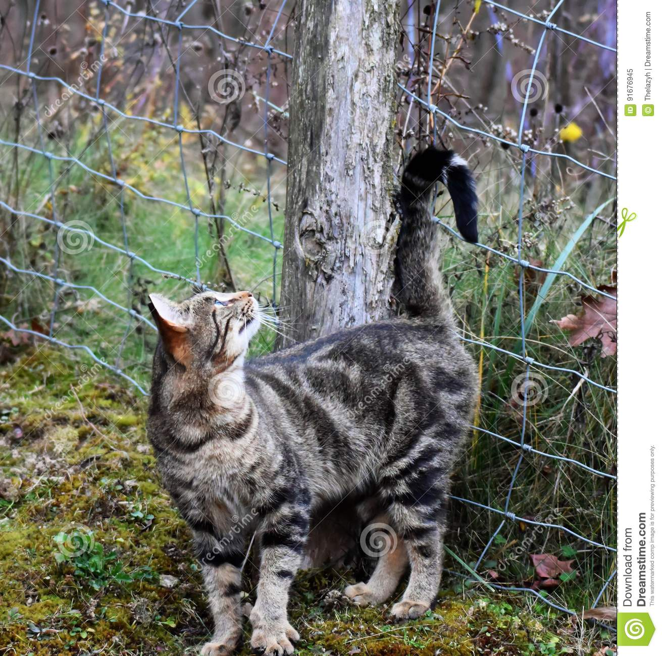Barn Cat Rubbing On Fence Post Stock Image - Image of tabby, rubbing ...