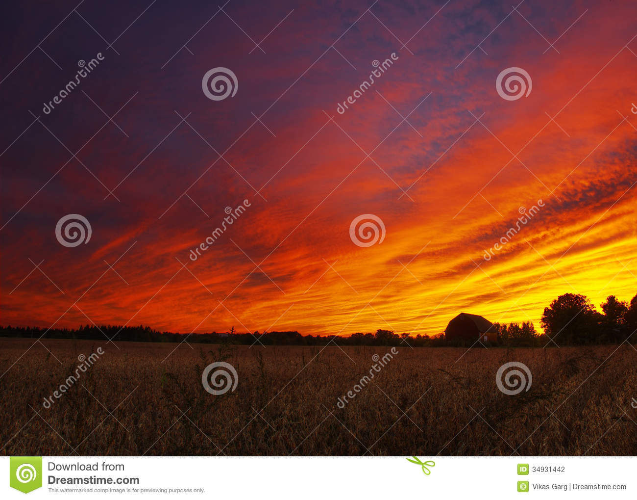 Barn With A Dramatic Sunset And Corn Fields Stock