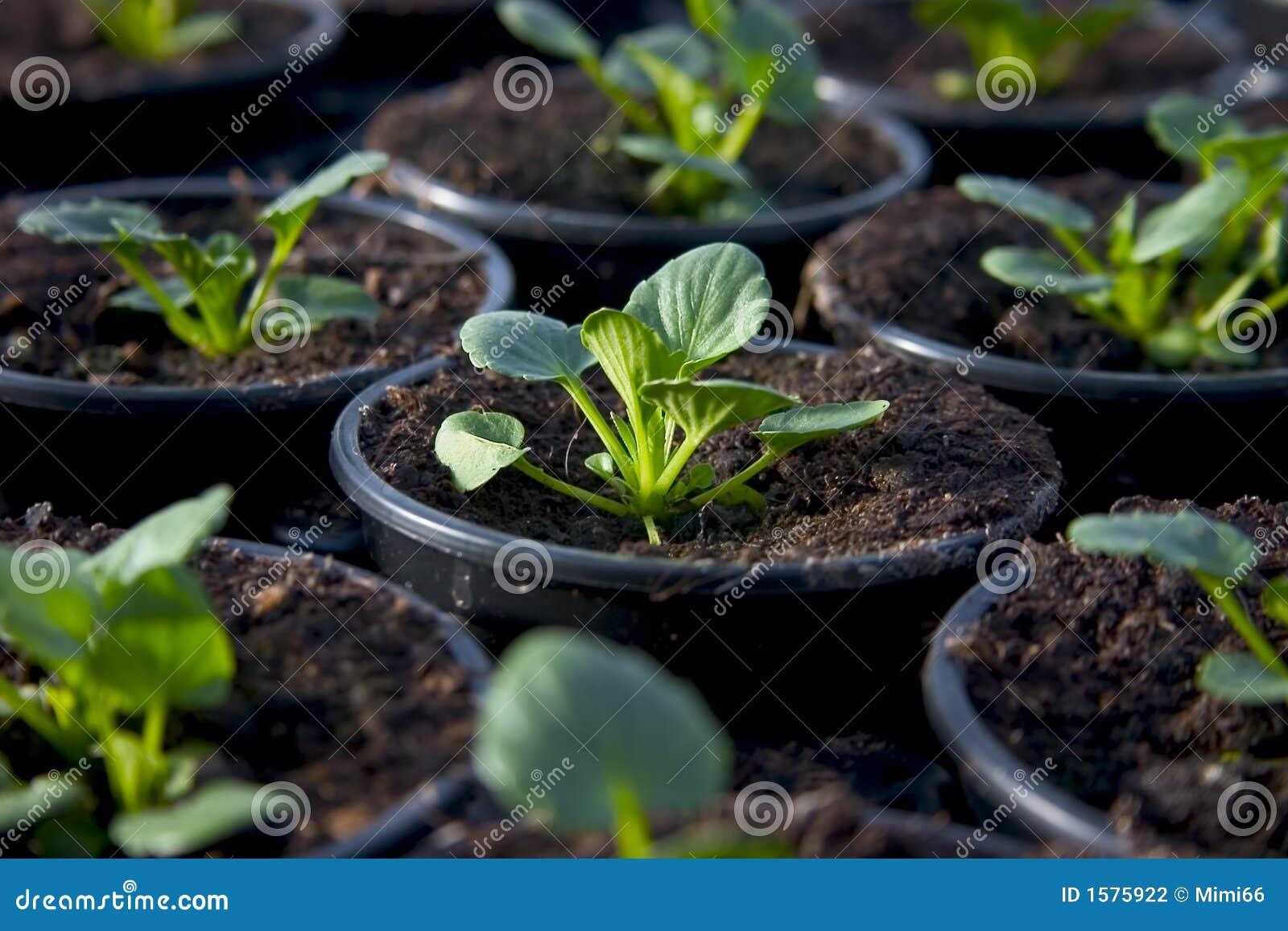 Barn för 1 blommabarnkammareväxt