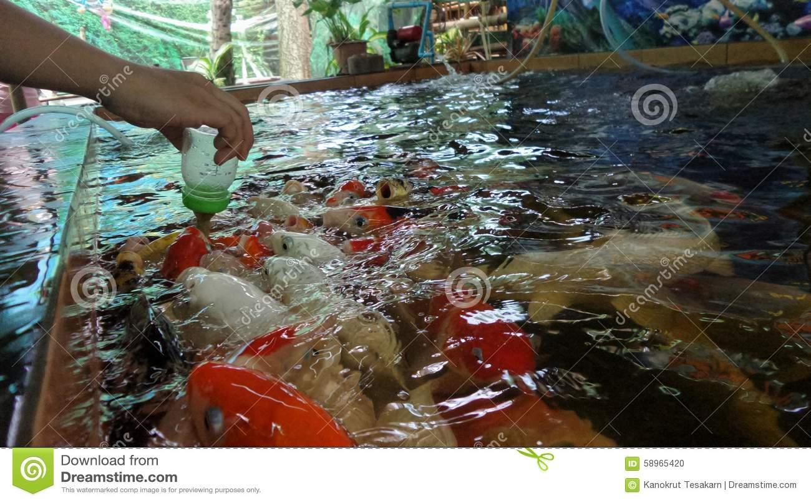 Barn som matar den utsmyckade karpen, fiskar mjölkar förbi flaskan