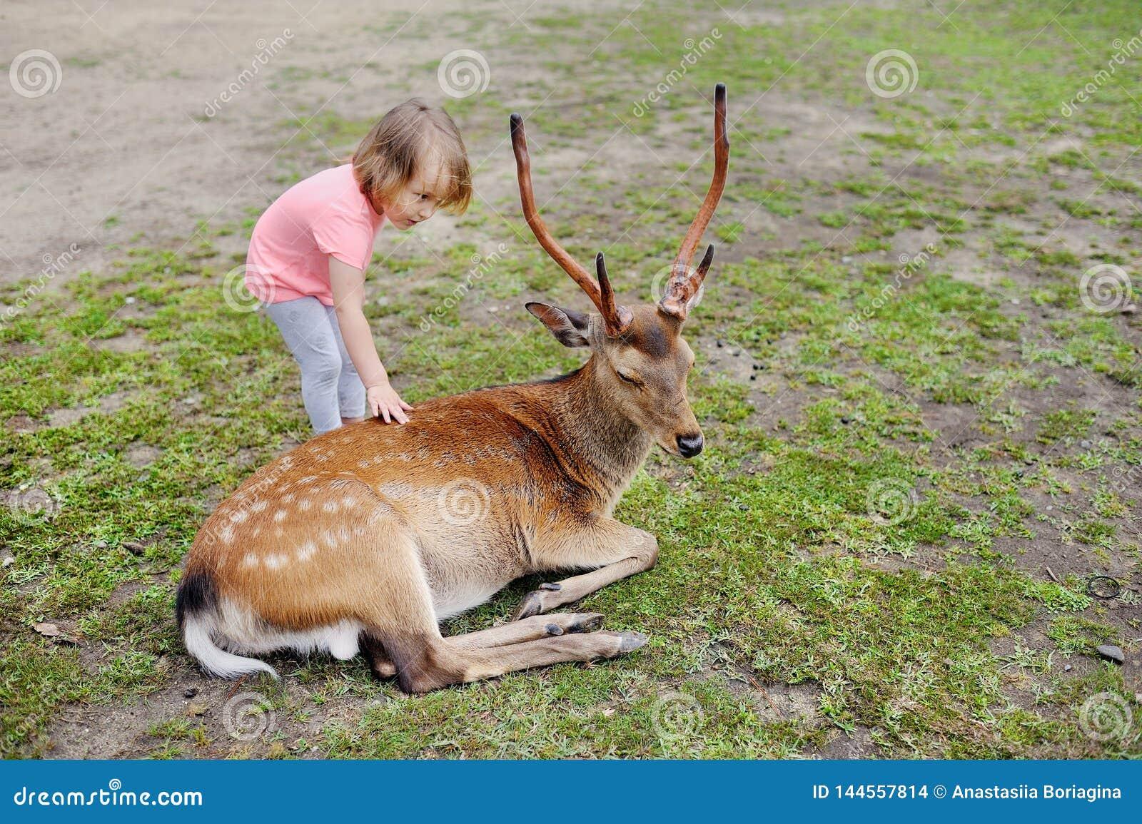 Barn som matar l?sa hjortar p? att dalta zoo Ungematningsdjur p? den utomhus- safari parkerar Unge och ?lsklings- djur