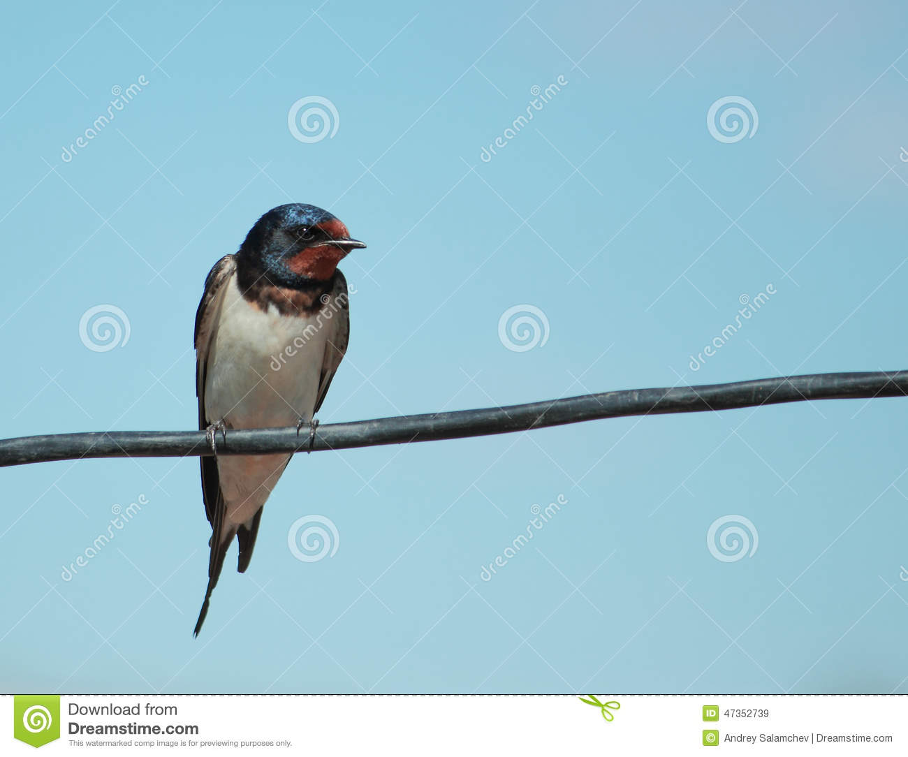 Barn swallow sit on wire stock image. Image of nature - 47352739