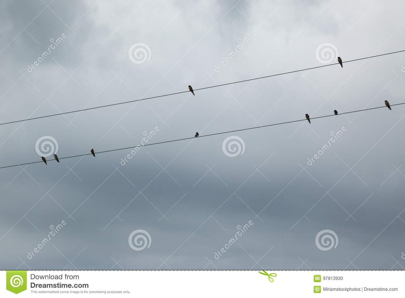 Barn Swallows on a Wire stock photo. Image of nature - 97813930