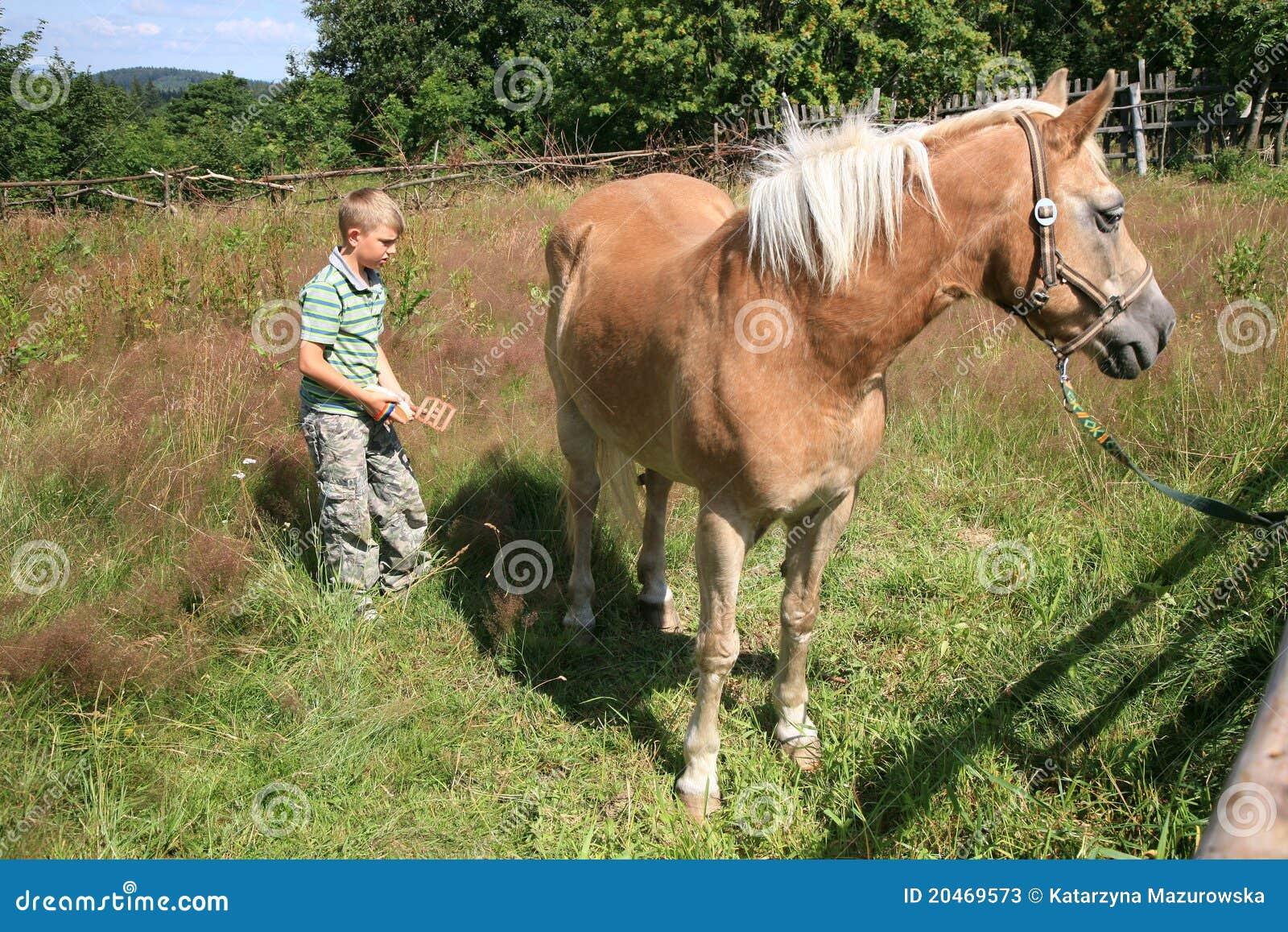 Barnhaflingerhäst